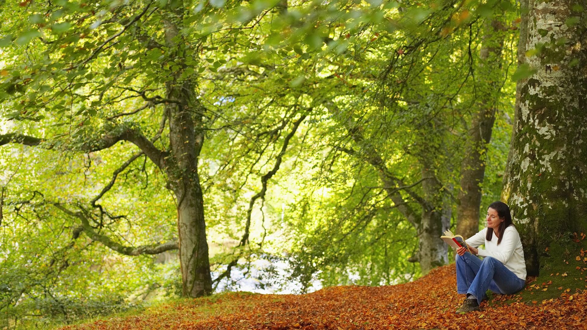 Forest therapy relieves stress with healing power of ...