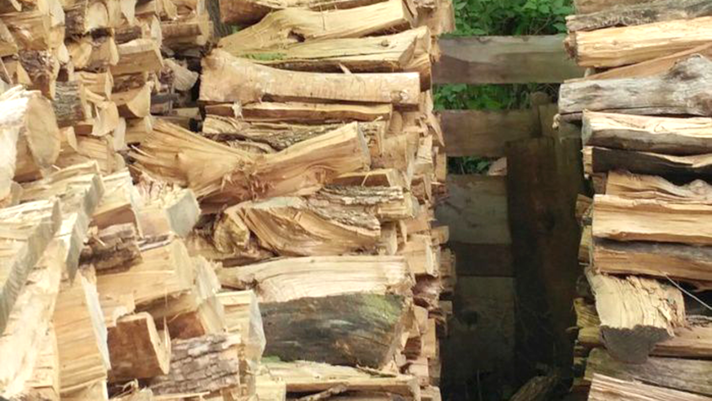 can you spot the cat hidden in this pile of logs