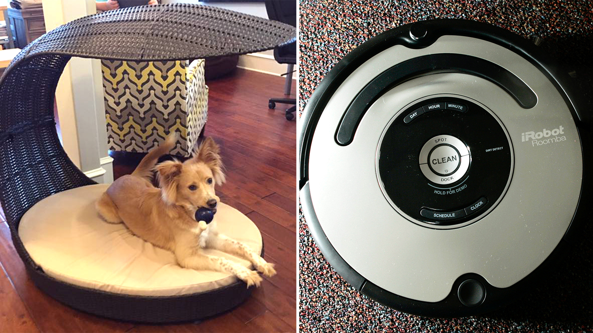 When Roomba Met Dog Poop Man S Poopocalypse Goes Viral