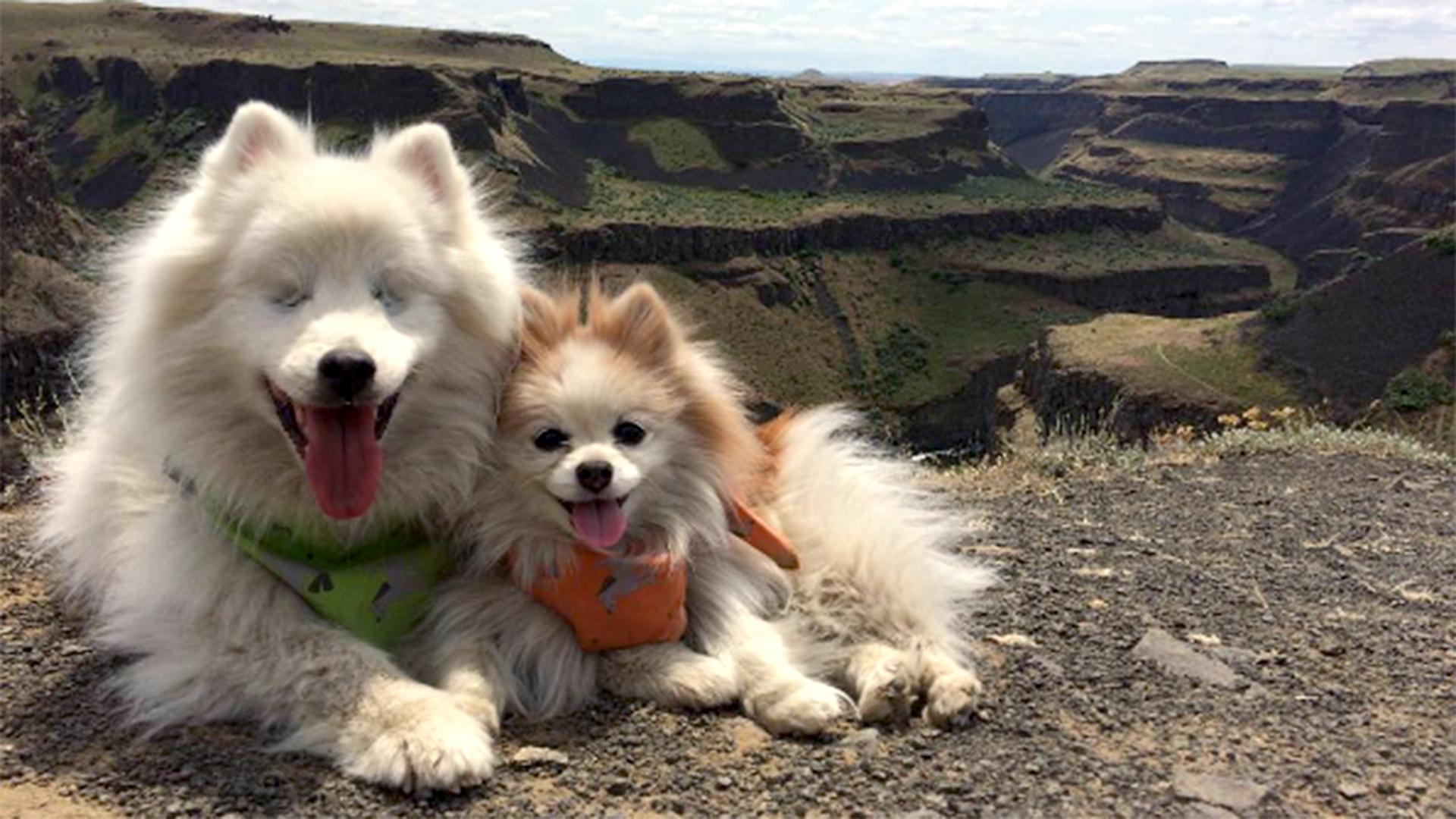 Best Friend In Washington Is A Dog