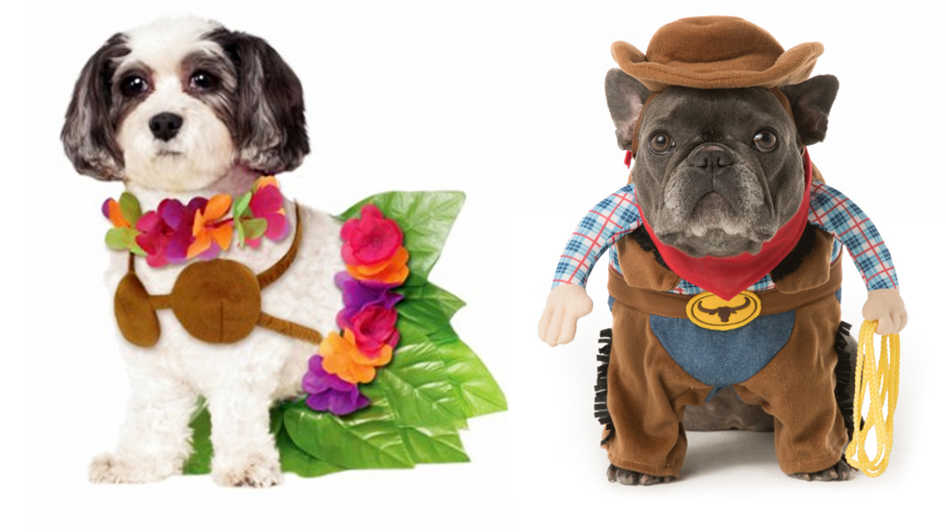 sc 1 st  Today Show & Halloween dog costume ideas: 32 easy cute costumes for your canine