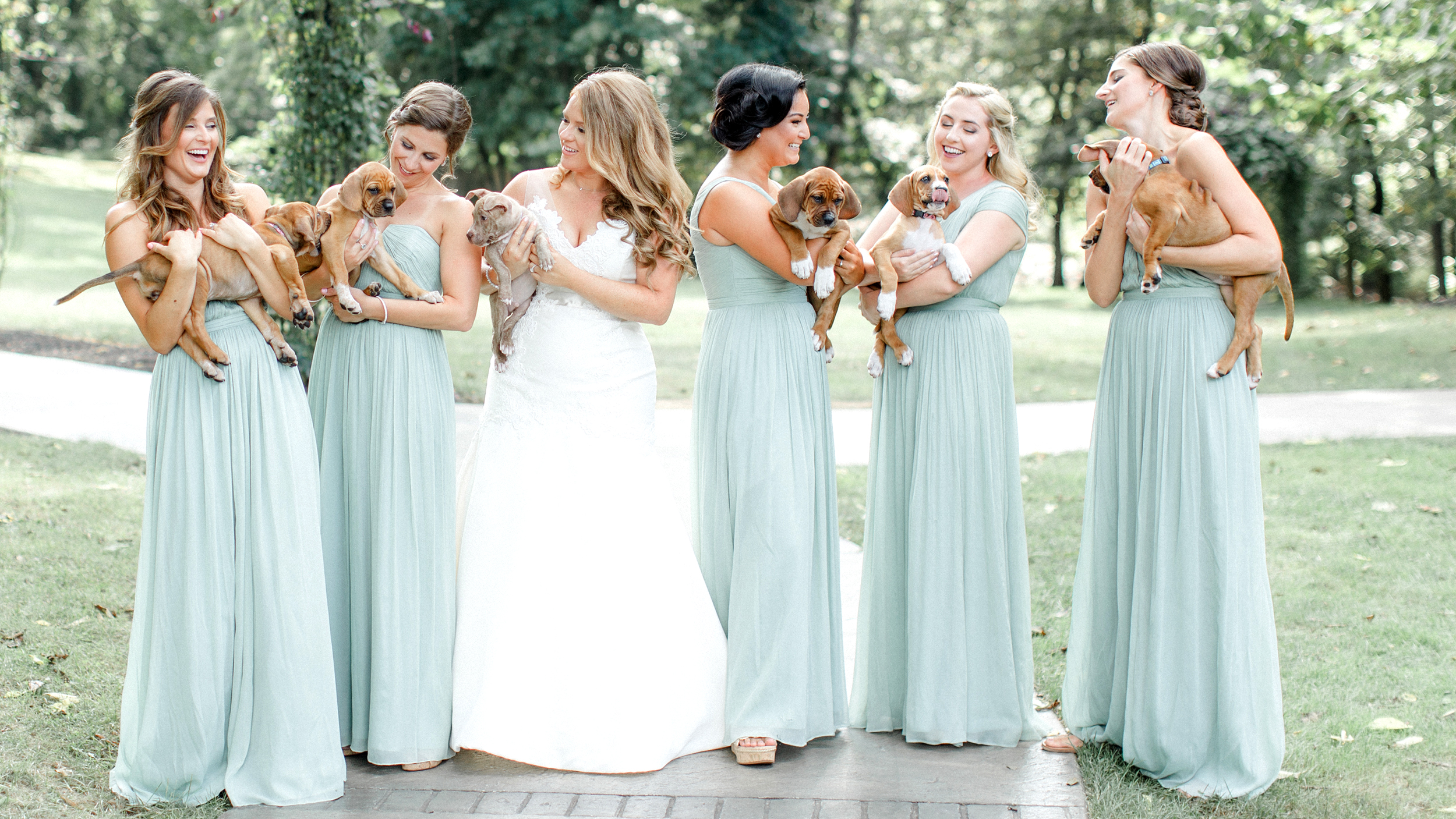 Bridesmaids hold puppies instead of flowers in adorable for Dresses for wedding party