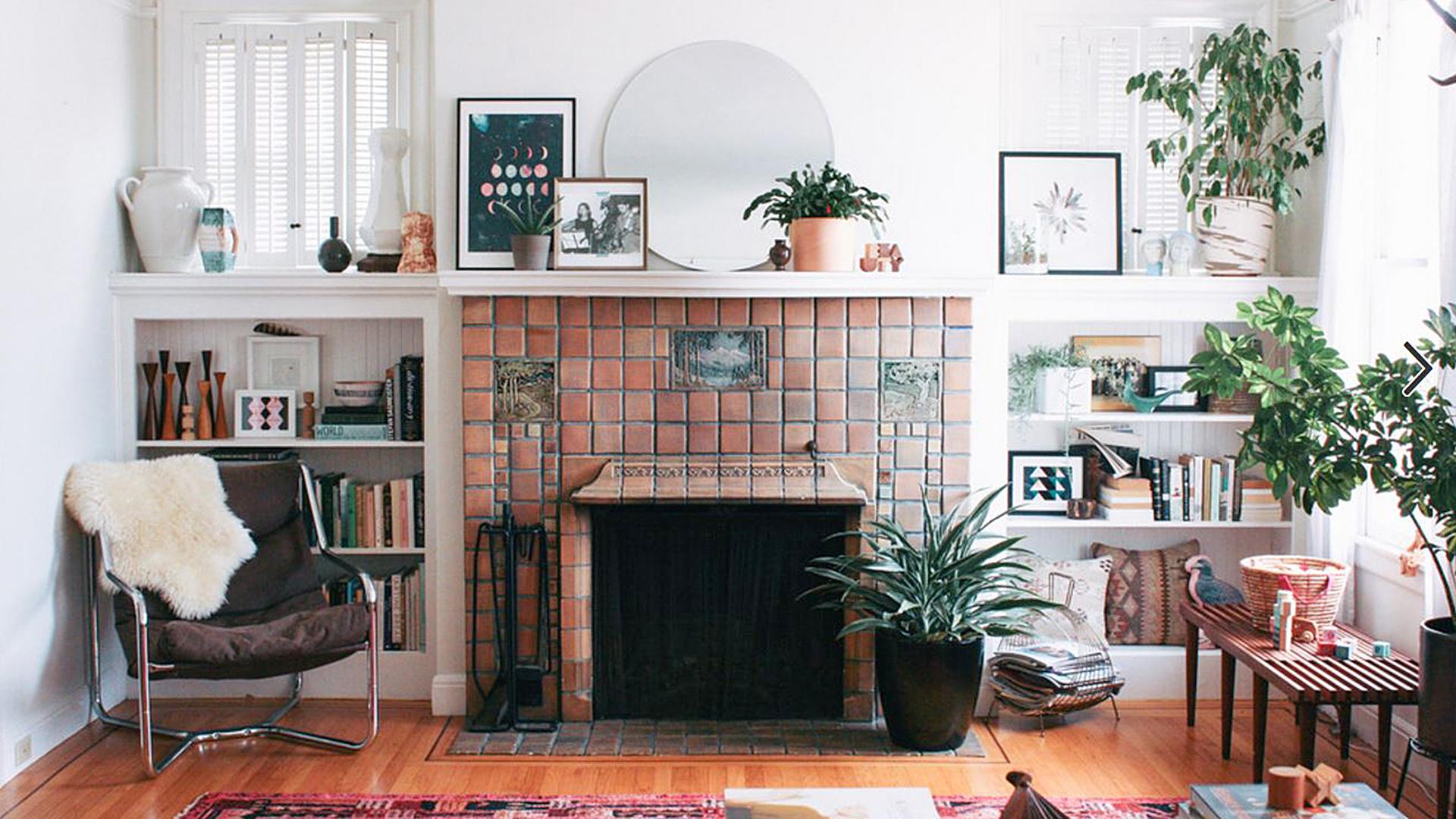 7 easy houseplants for an east-facing window Spidar Plant Norfolk Pine House on