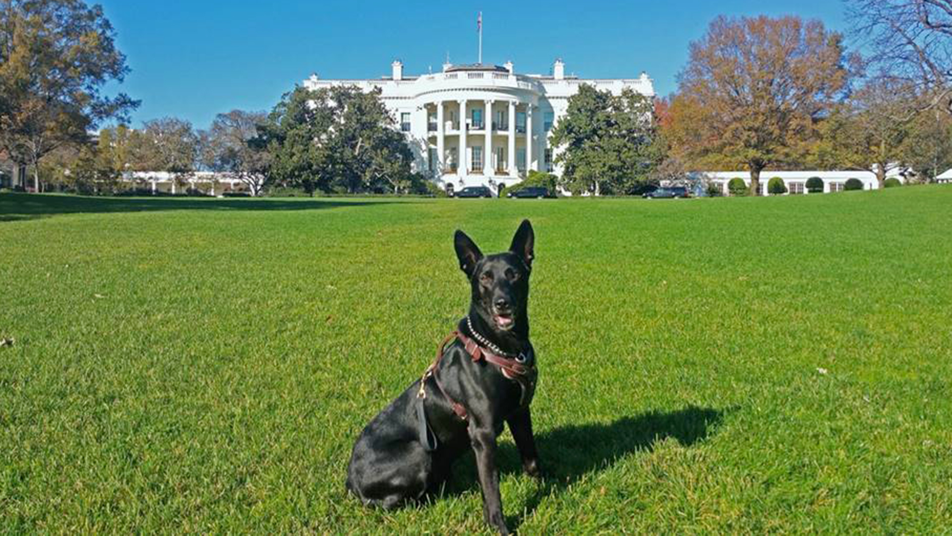 Secret Service Dog Stops White House Fence Jumper Devours Burgers
