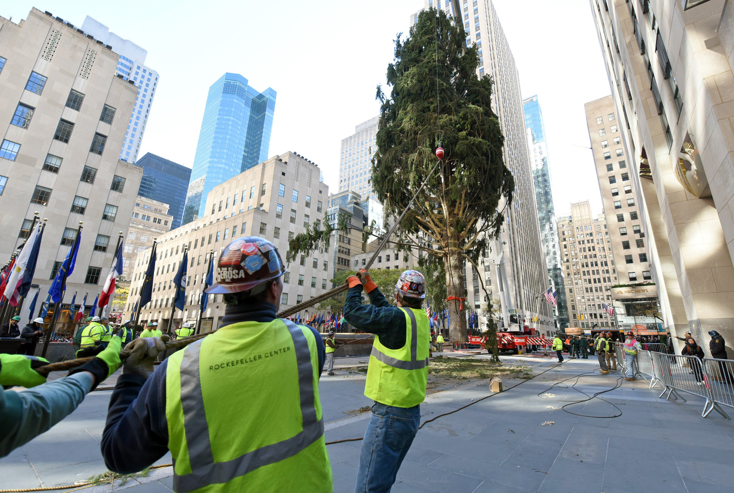 Christmas On The Way Rockefeller Center Tree Goes Up