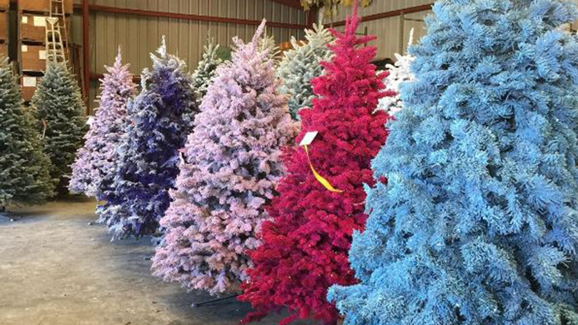 Colorful Tinted Real Christmas Trees