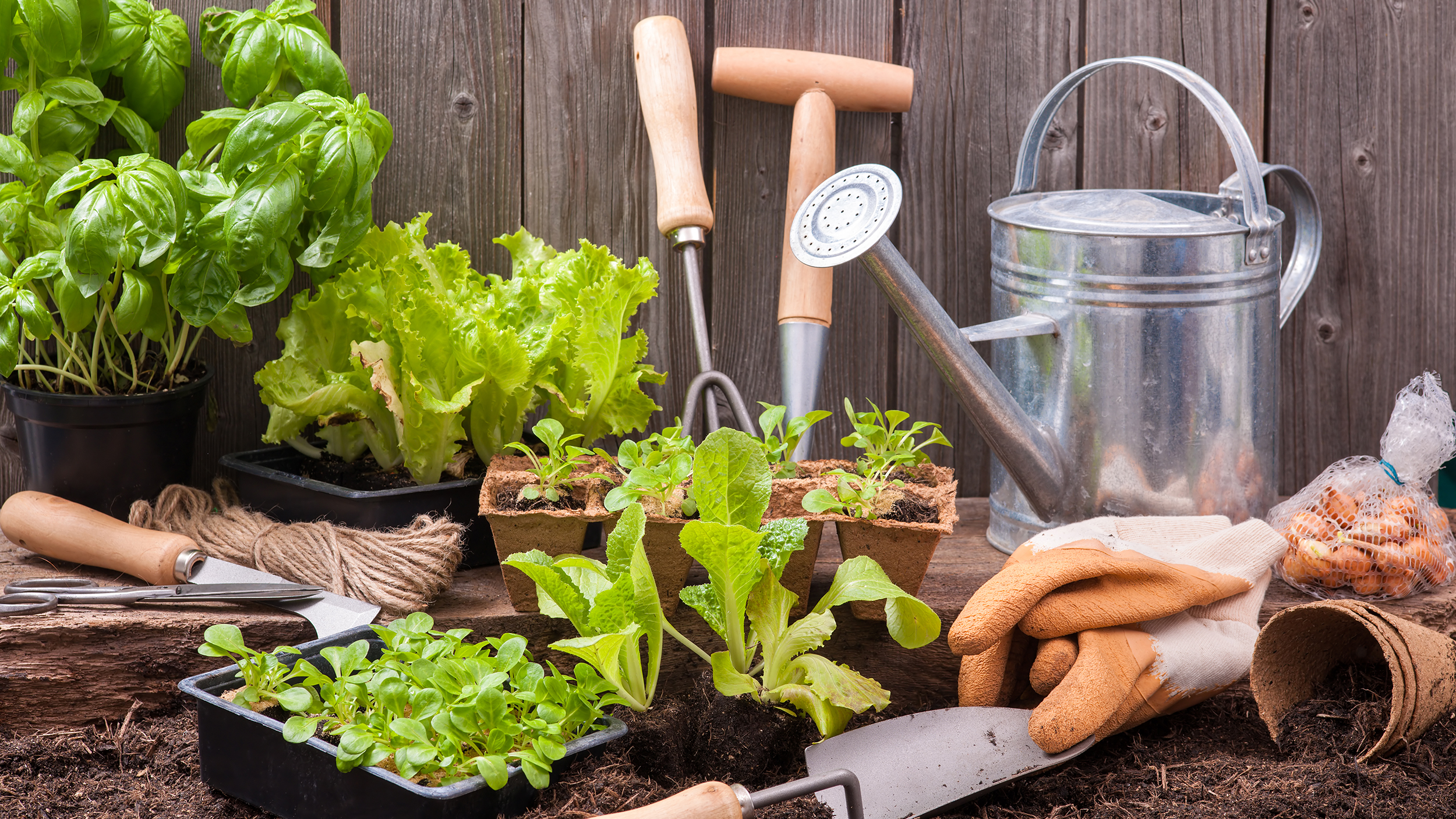 Gardening tips 3 things to know when planting for Home and garden equipment