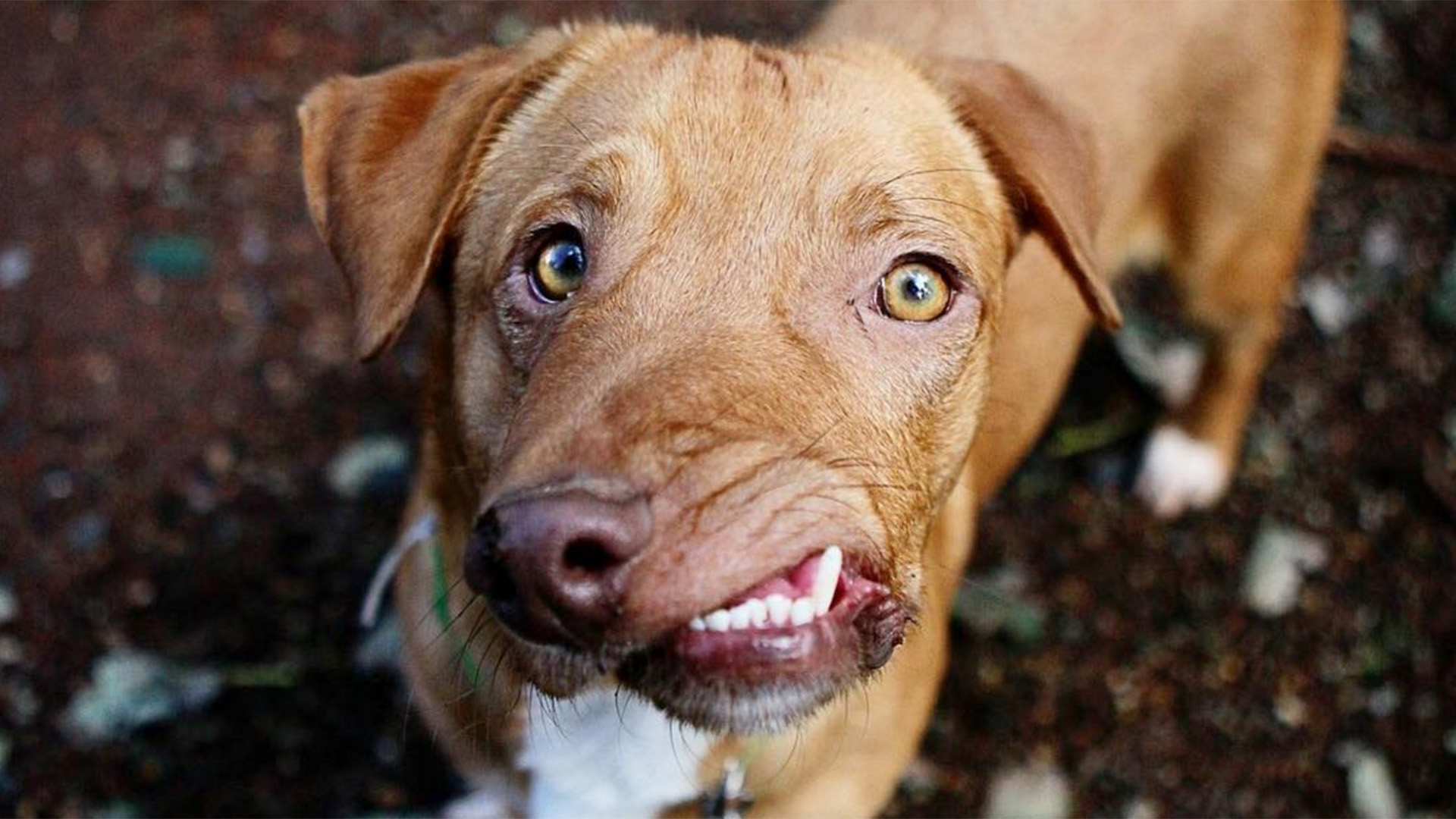 People are clamoring to adopt Picasso, the adorable dog ...