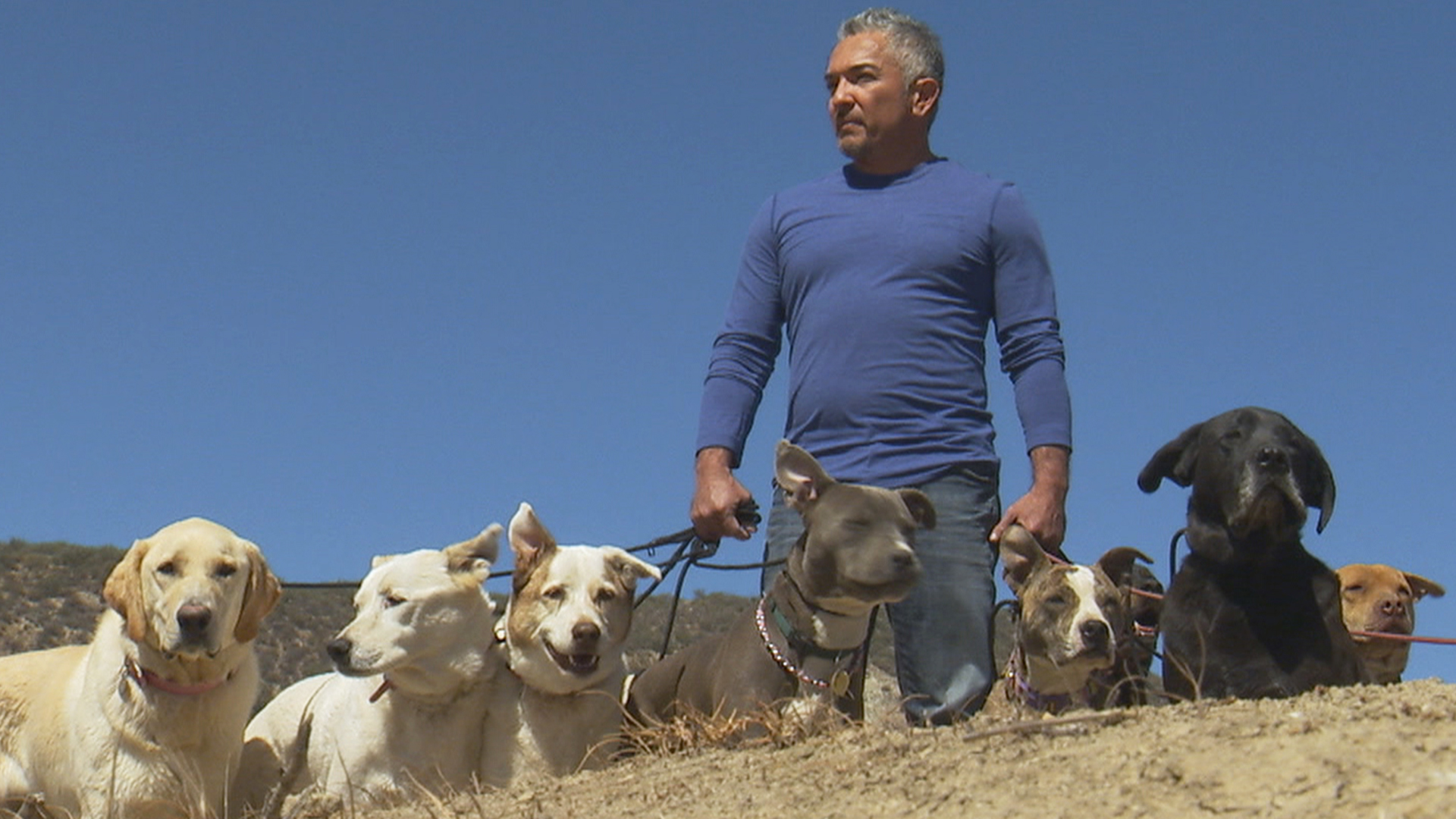 Dog Whisperer Cesar Millan Pictures