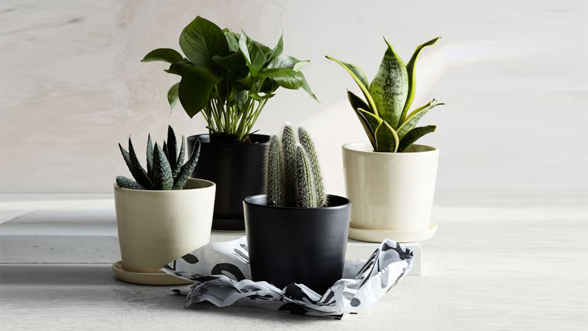 Big Pots Indoor Plants: Where To Buy Planters And Flower Pots For Outdoor And