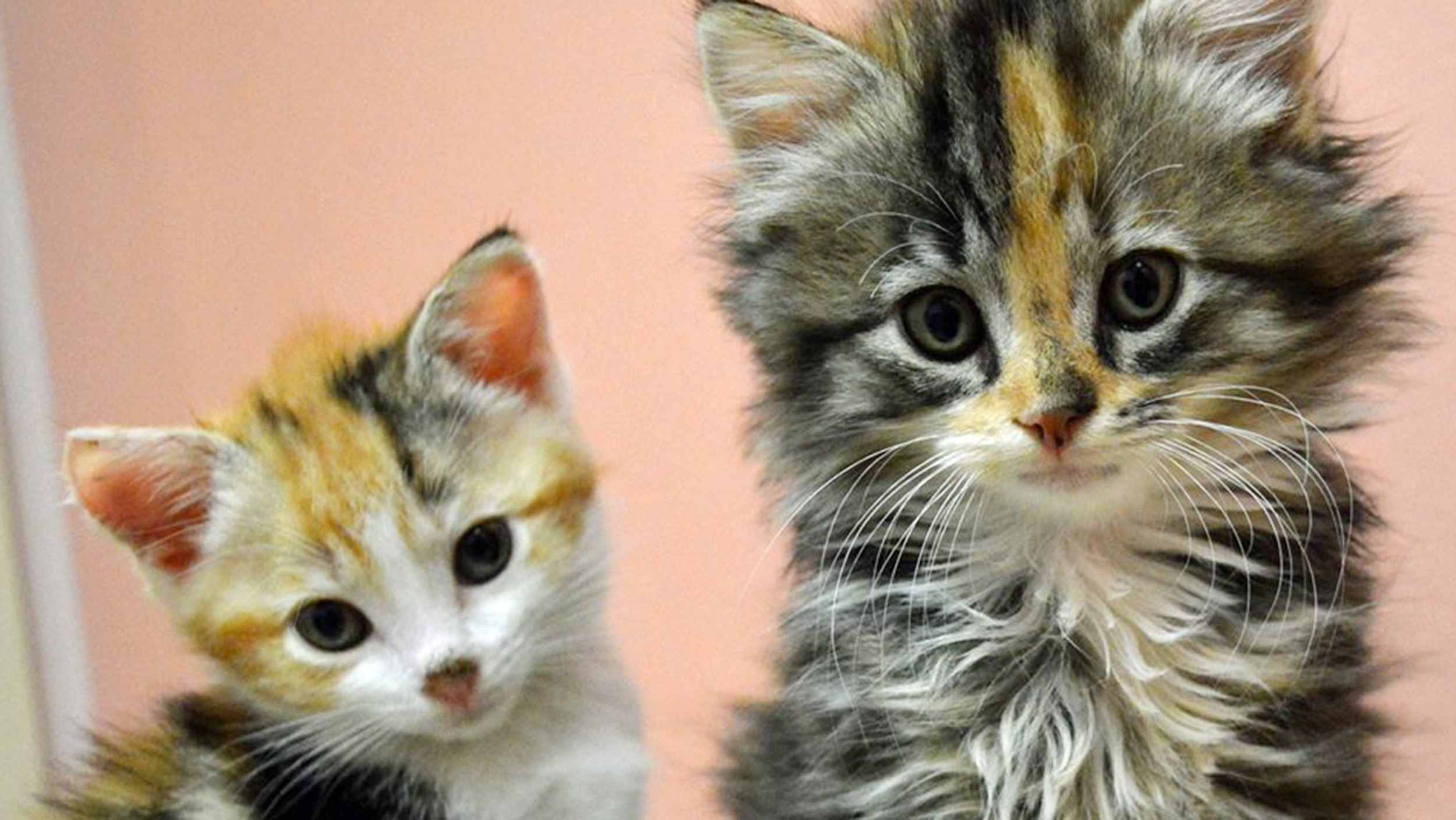 Adopt A Newborn Cat