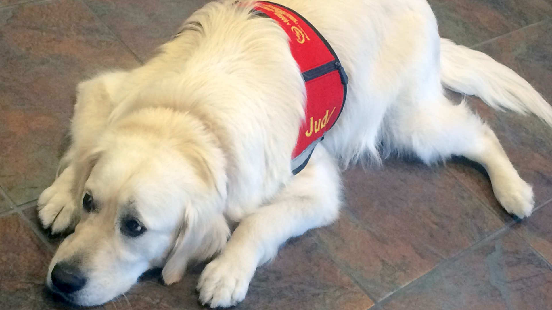 When humans grieve, more funeral homes are offering therapy dogs to help