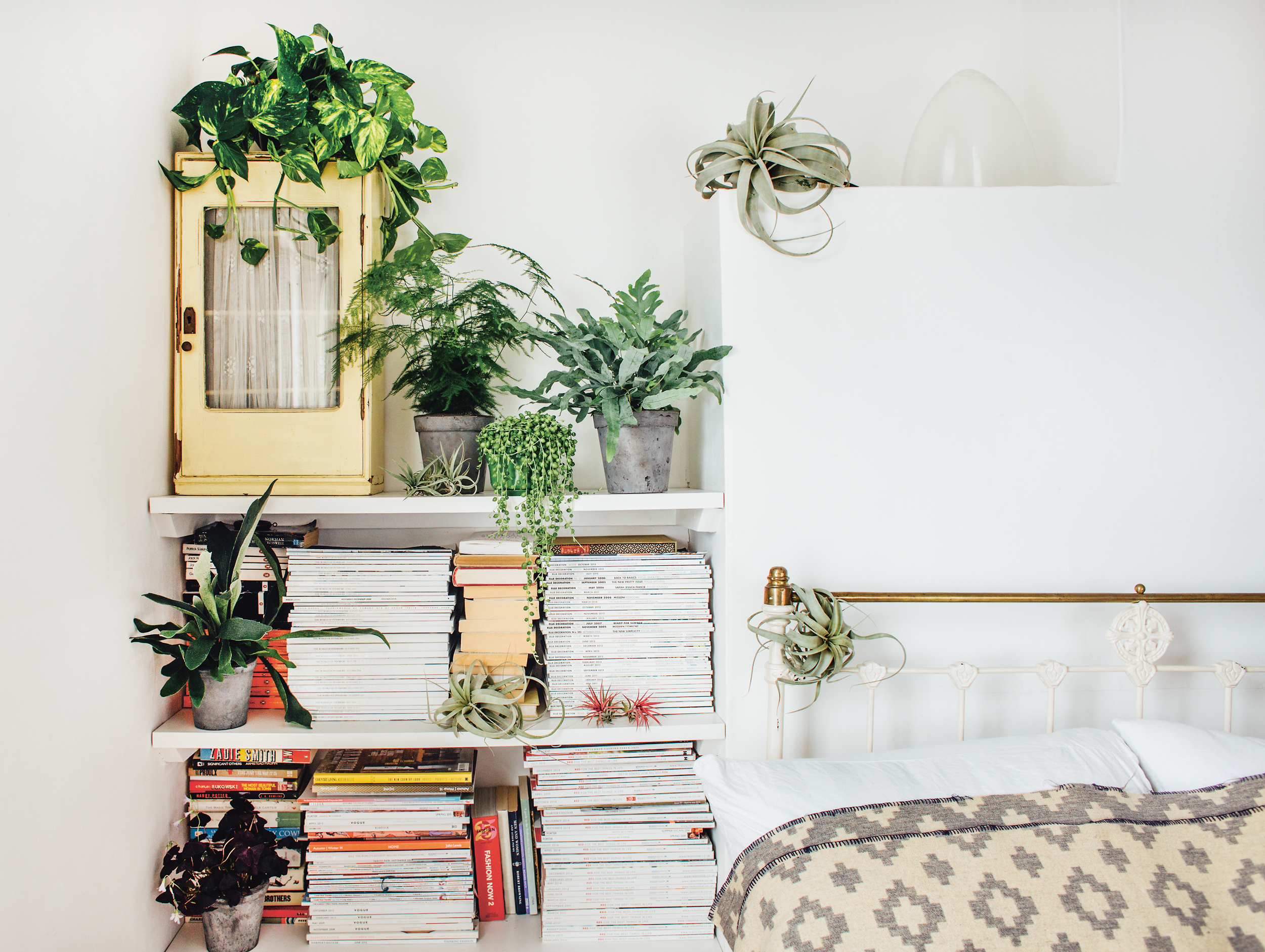 Why Indoor Plants Make You Feel Better