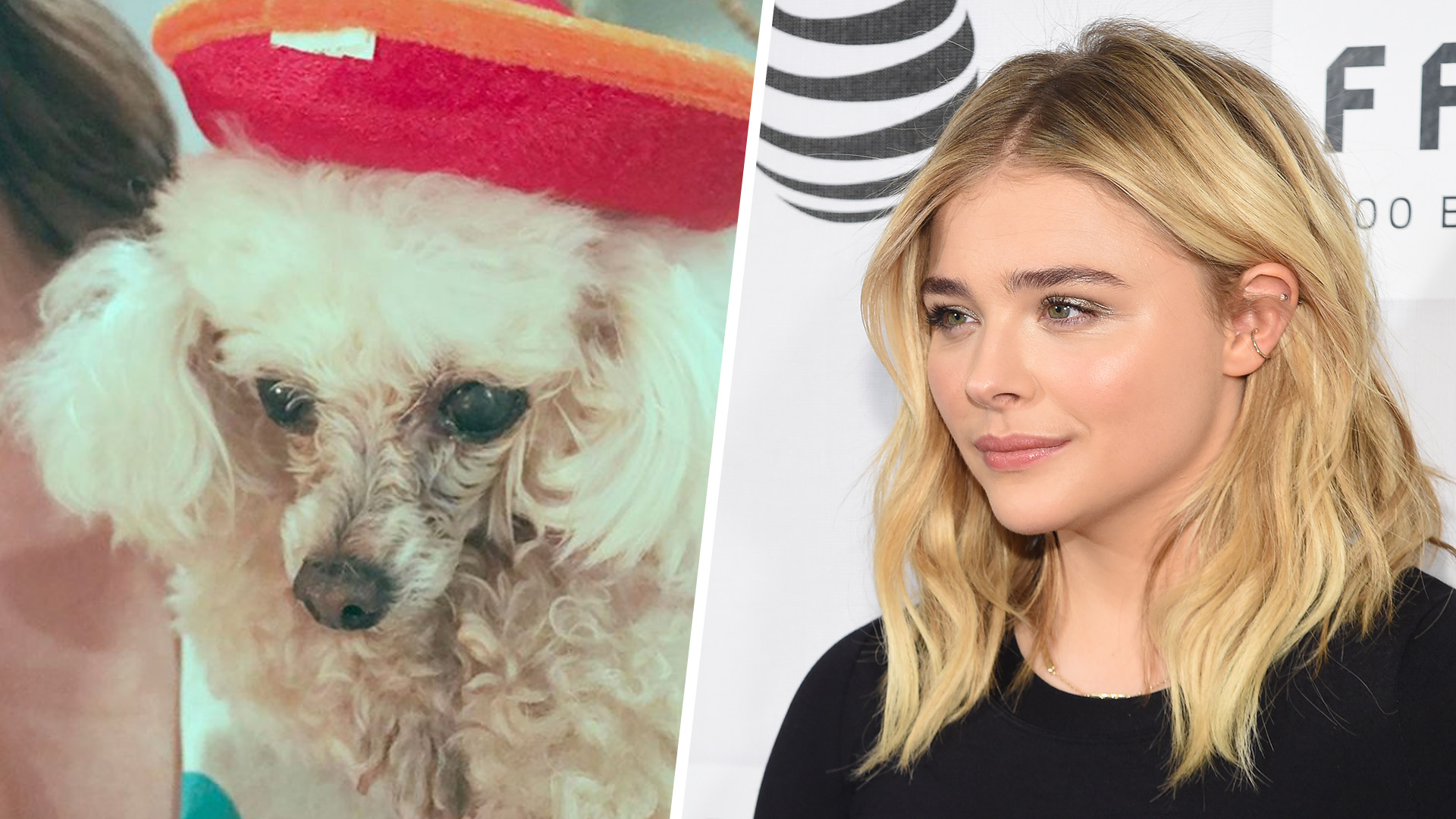 Chloe Grace Moretz loses second dog in a month — See her sweet tribute