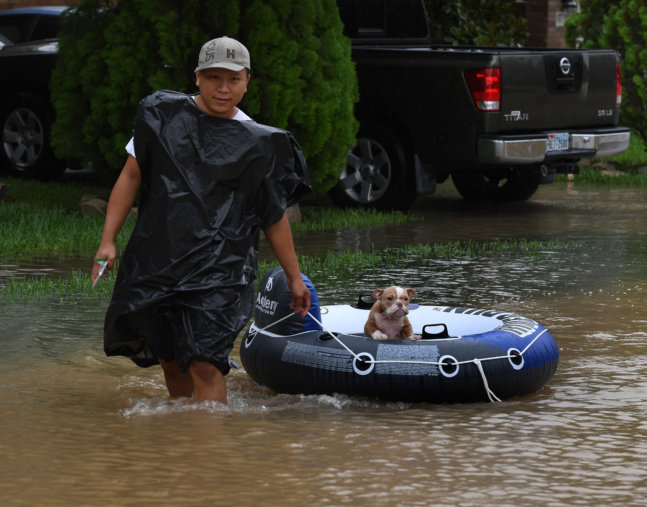 Image: Pets Rescued in Texas