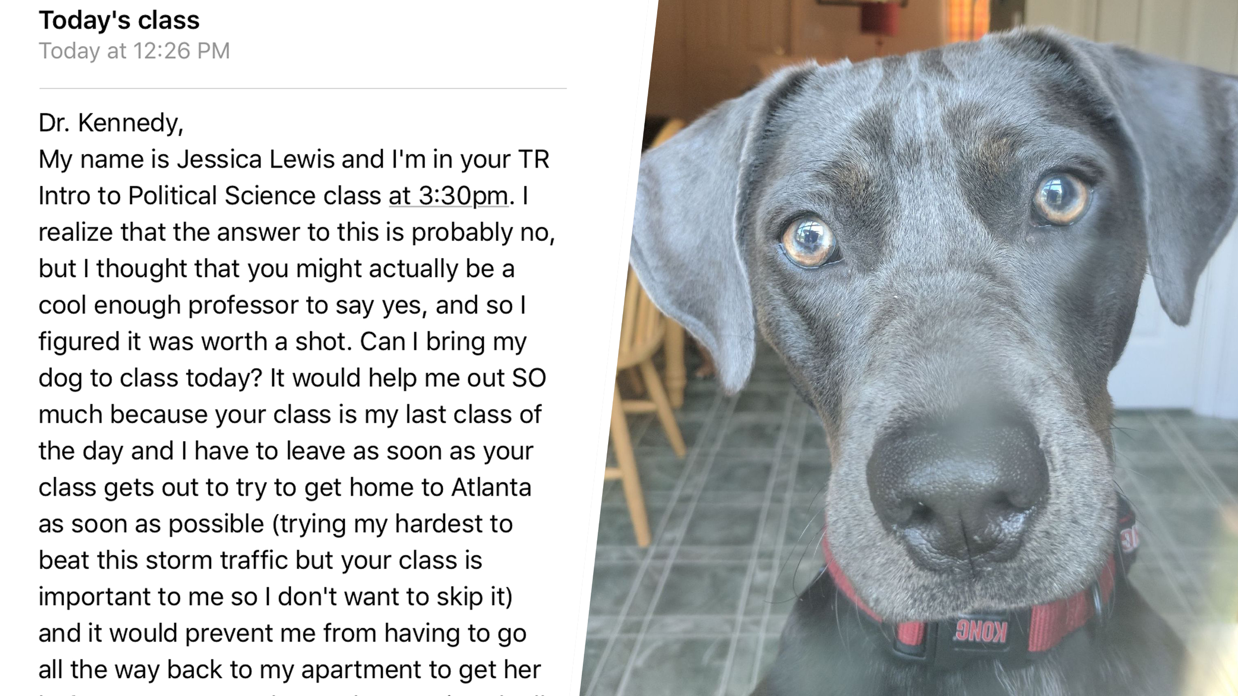 Student asks to bring dog to class during hurricane — and got this amazing reply
