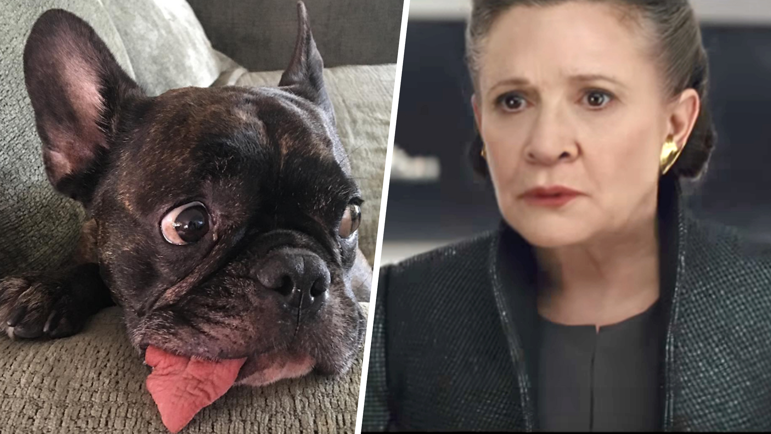 carrie fisher service dog