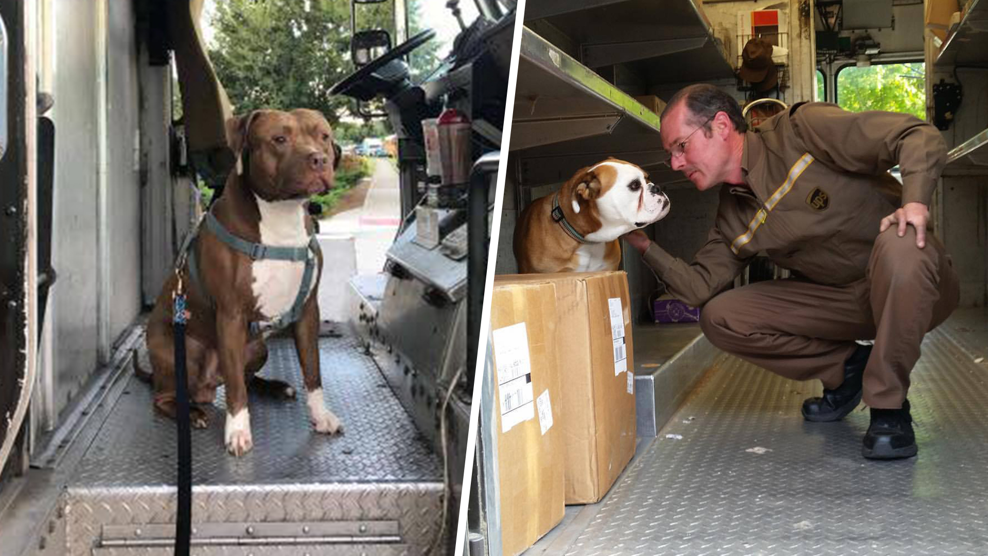 See the Facebook page dedicated to the dogs UPS drivers meet on their routes