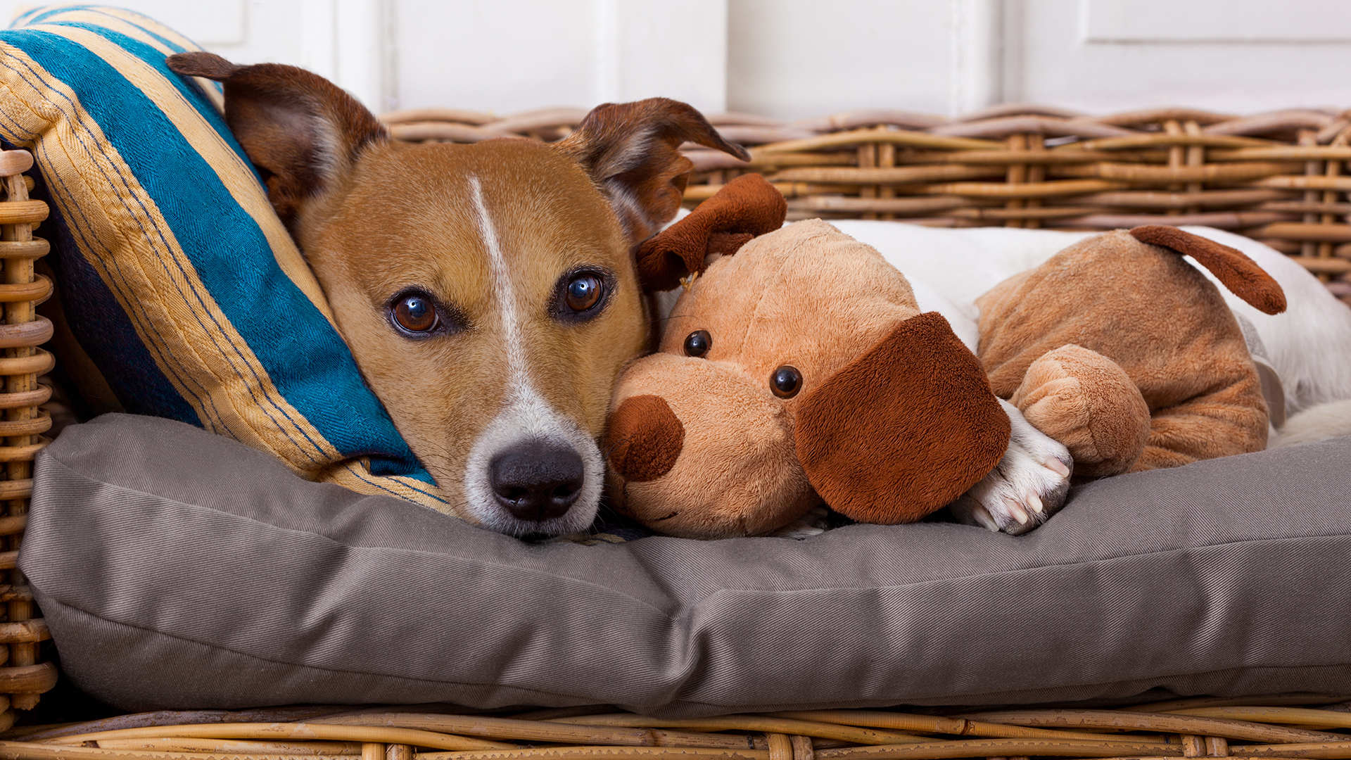 Items You Can Throw In The Washing Machine Dog Bed