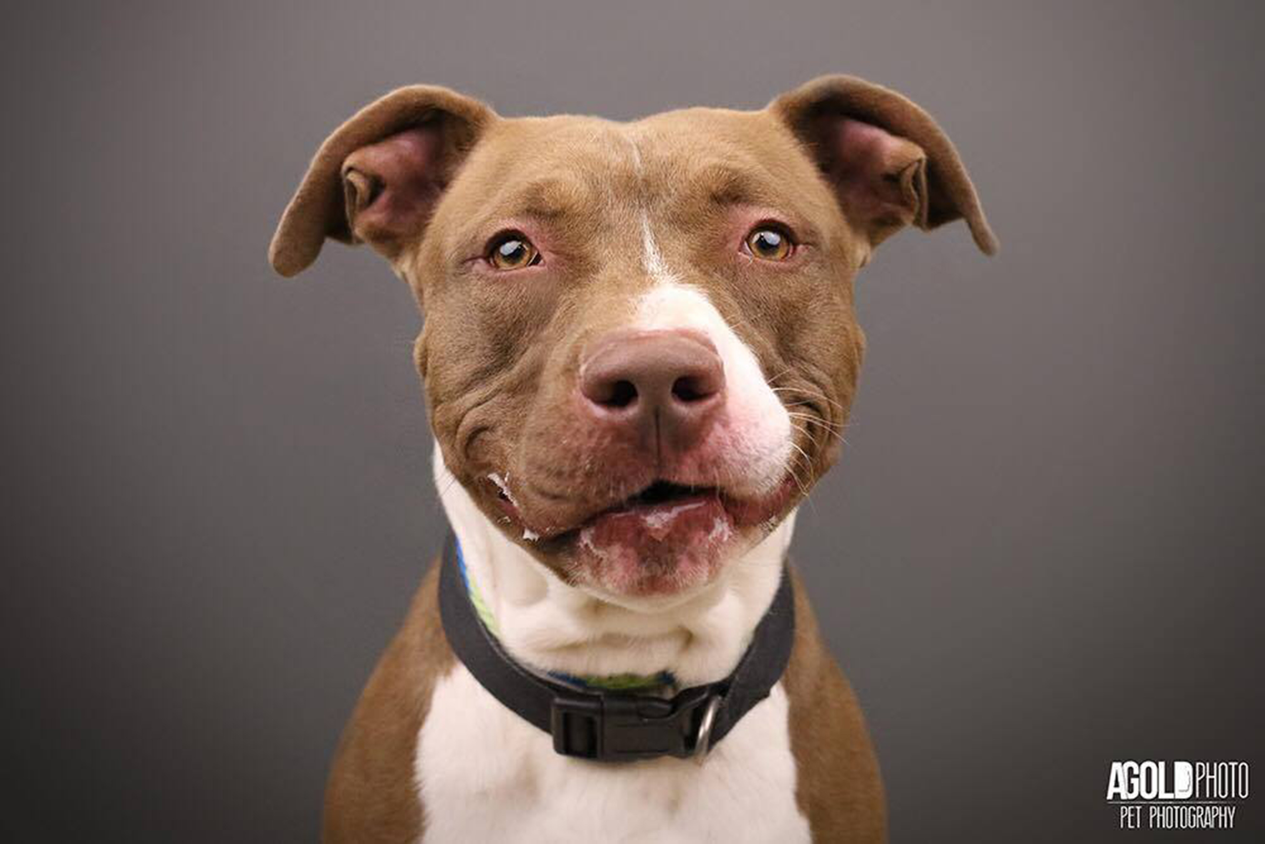 What is a pit bull? It's not actually a dog breed