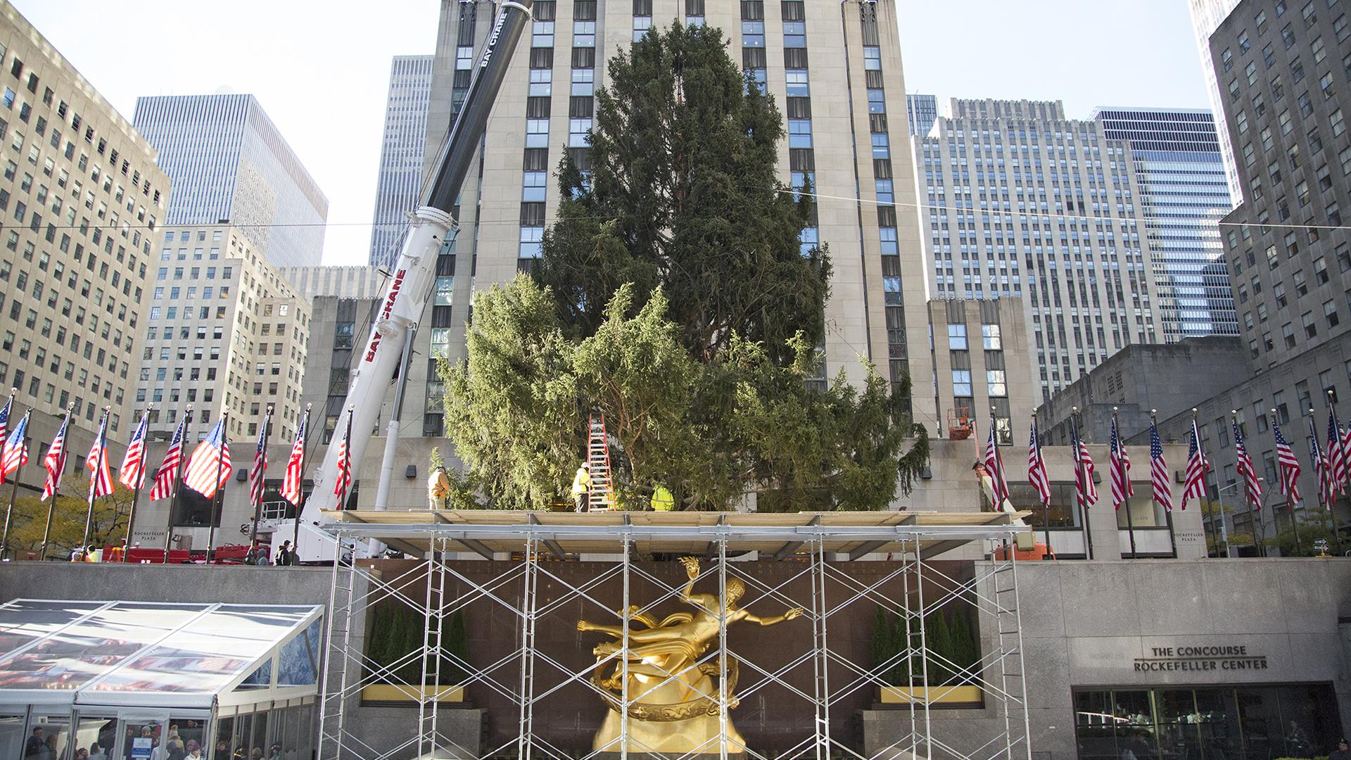 rockefeller center christmas tree arrives on the plaza - Rockefeller Christmas Show