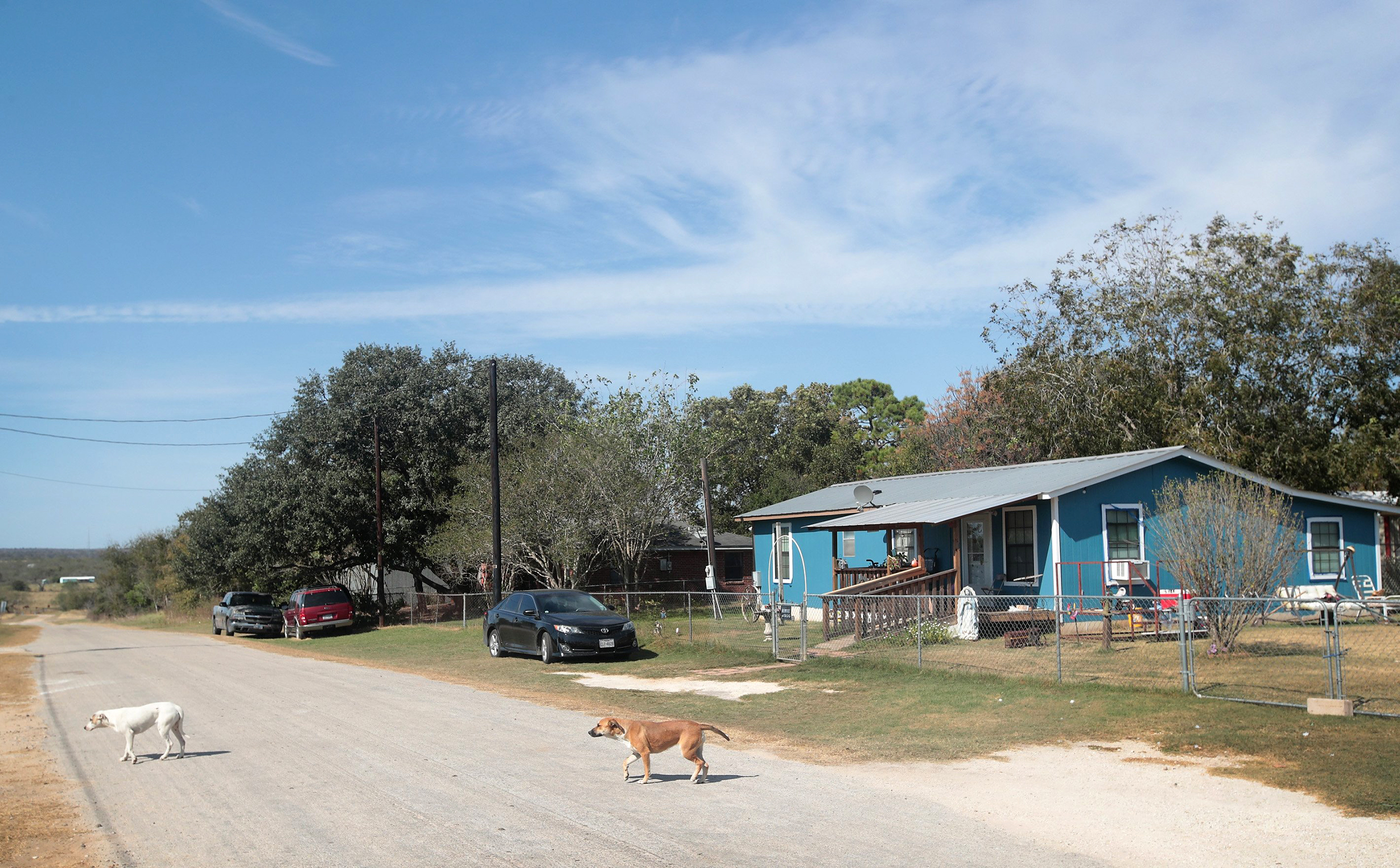 Image: Stray dogs walk across a street near the First Baptist Church of Sutherland Springs