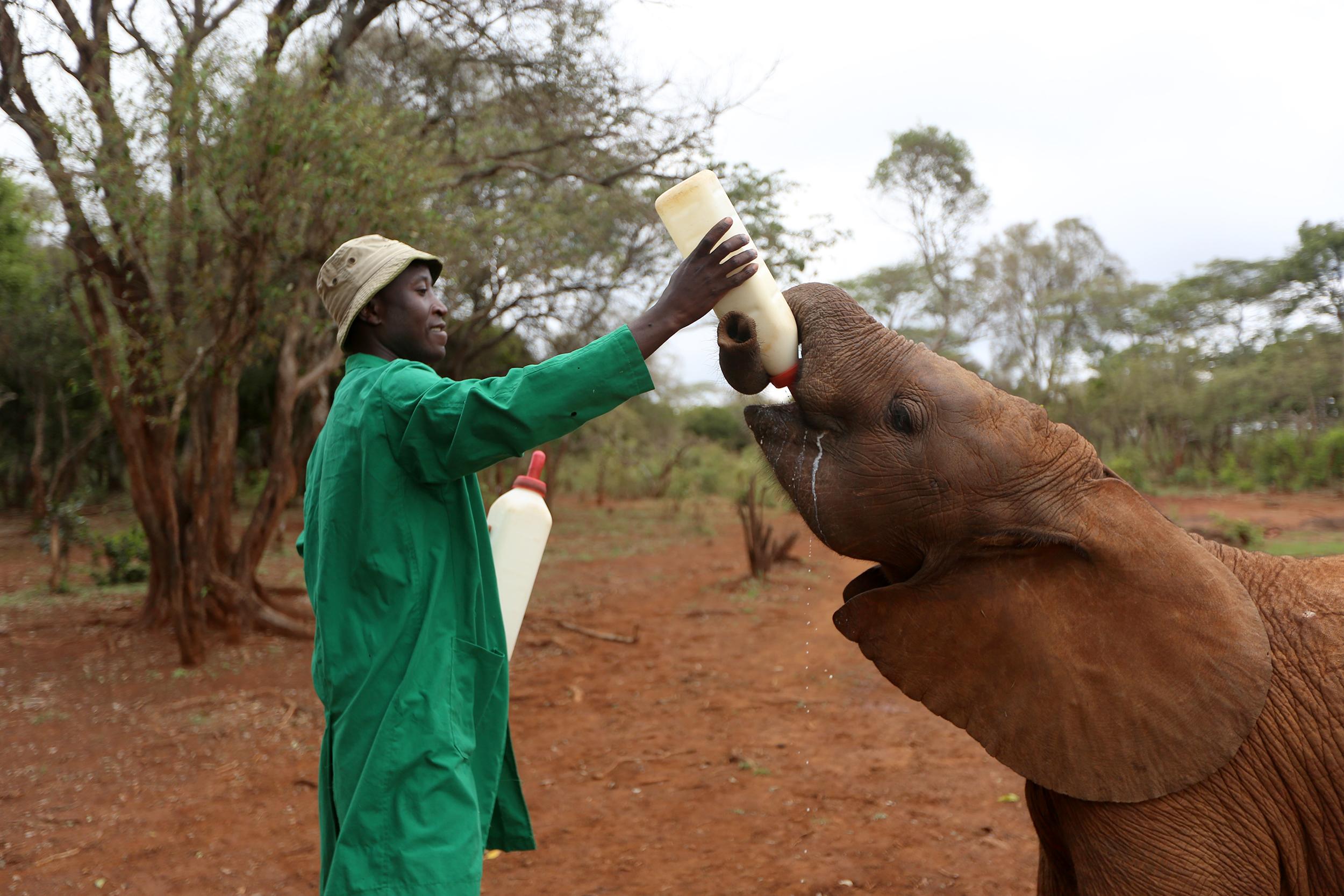 Image: Feeding a Baby Elephant
