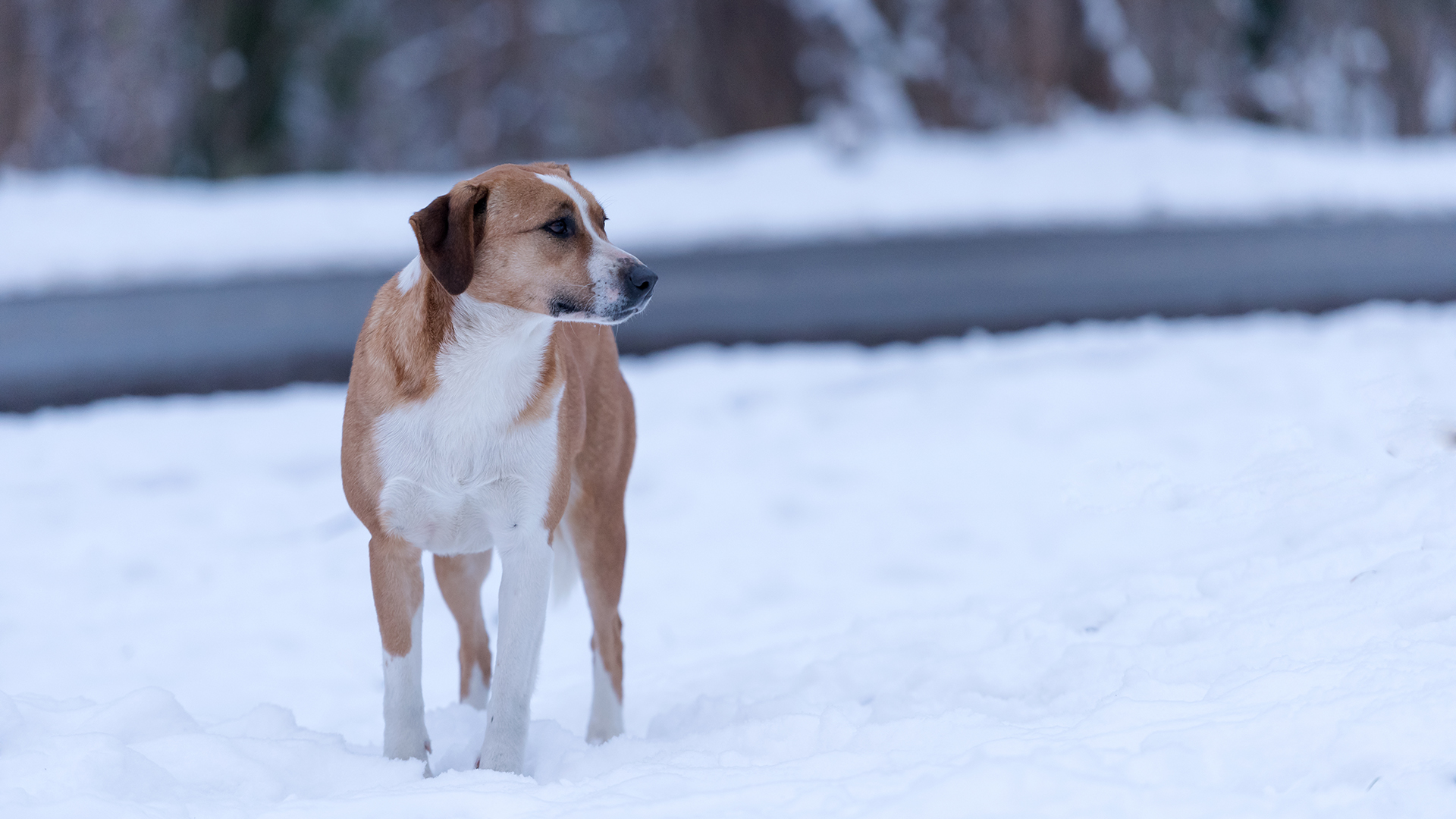 How to help dogs, cats left out in freezing cold weather