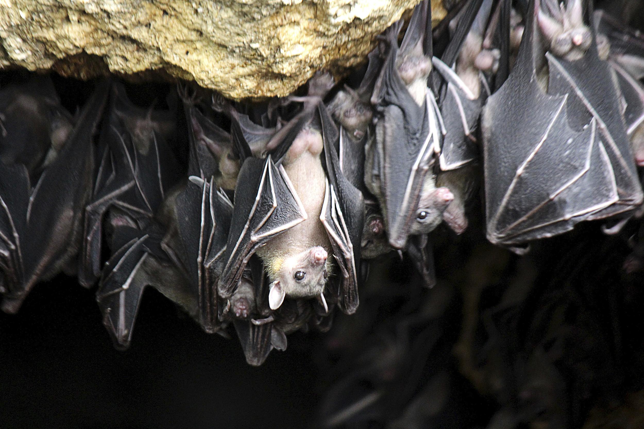 I Bat rabies alert saves swiss tourists who found sick bat in florida