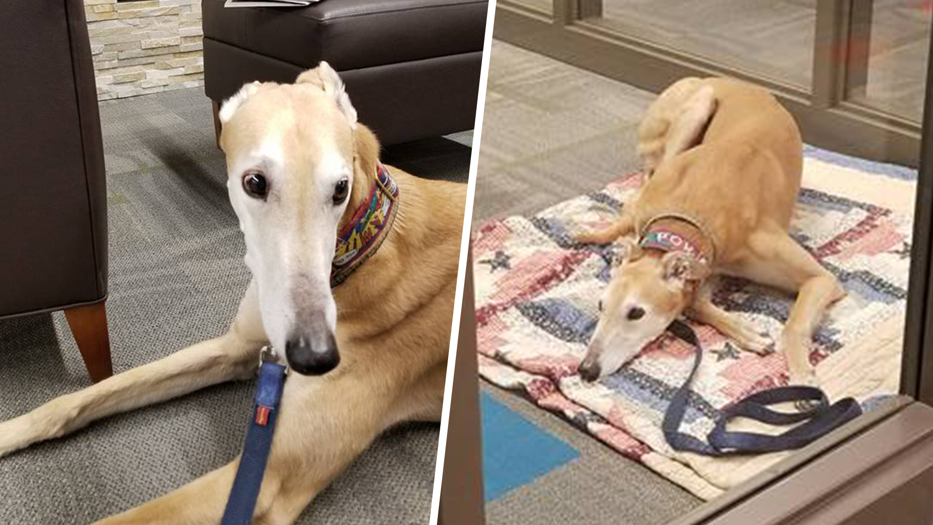 Sad Looking Library Dog Attracts Army Of Kid Readers