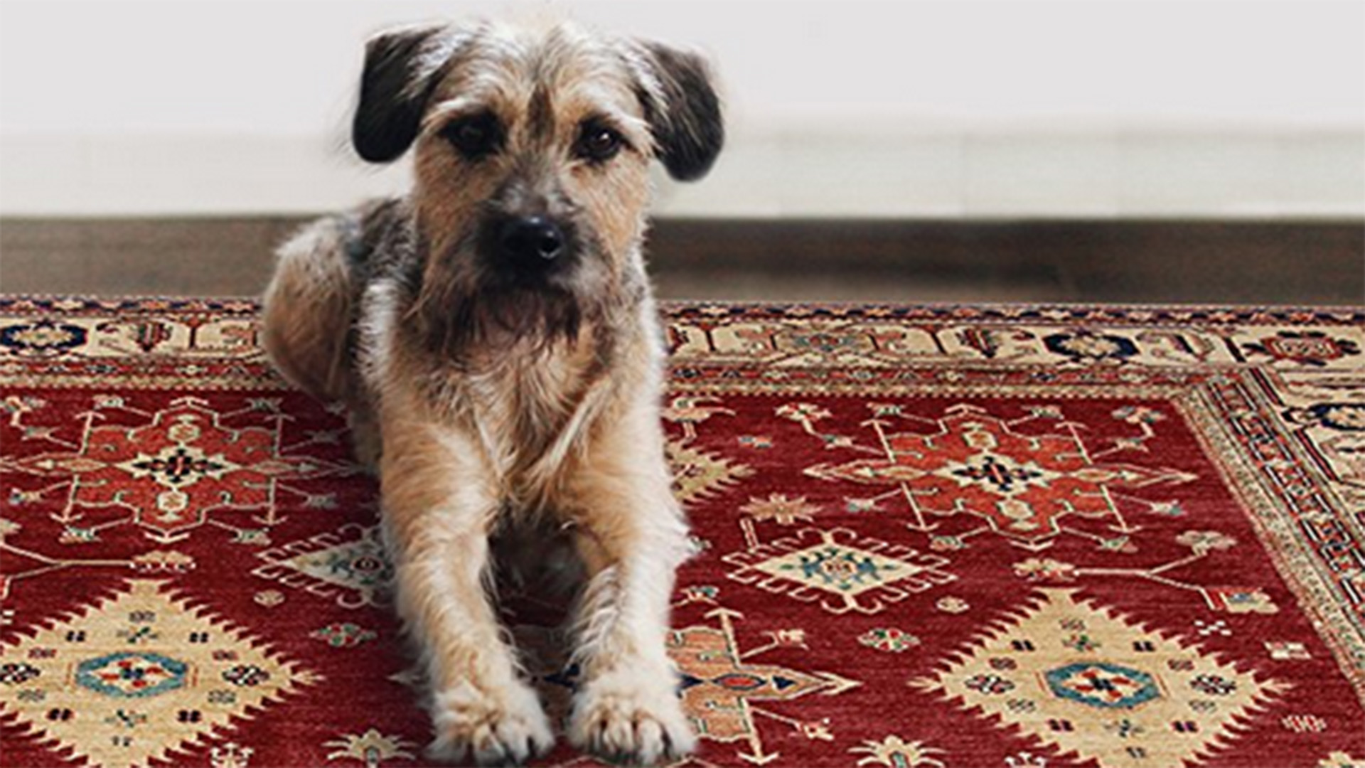 size ideas livingoomugs place living room rugs rug to for category unusual unique best forea with areaug cool quality delectable dogs material post