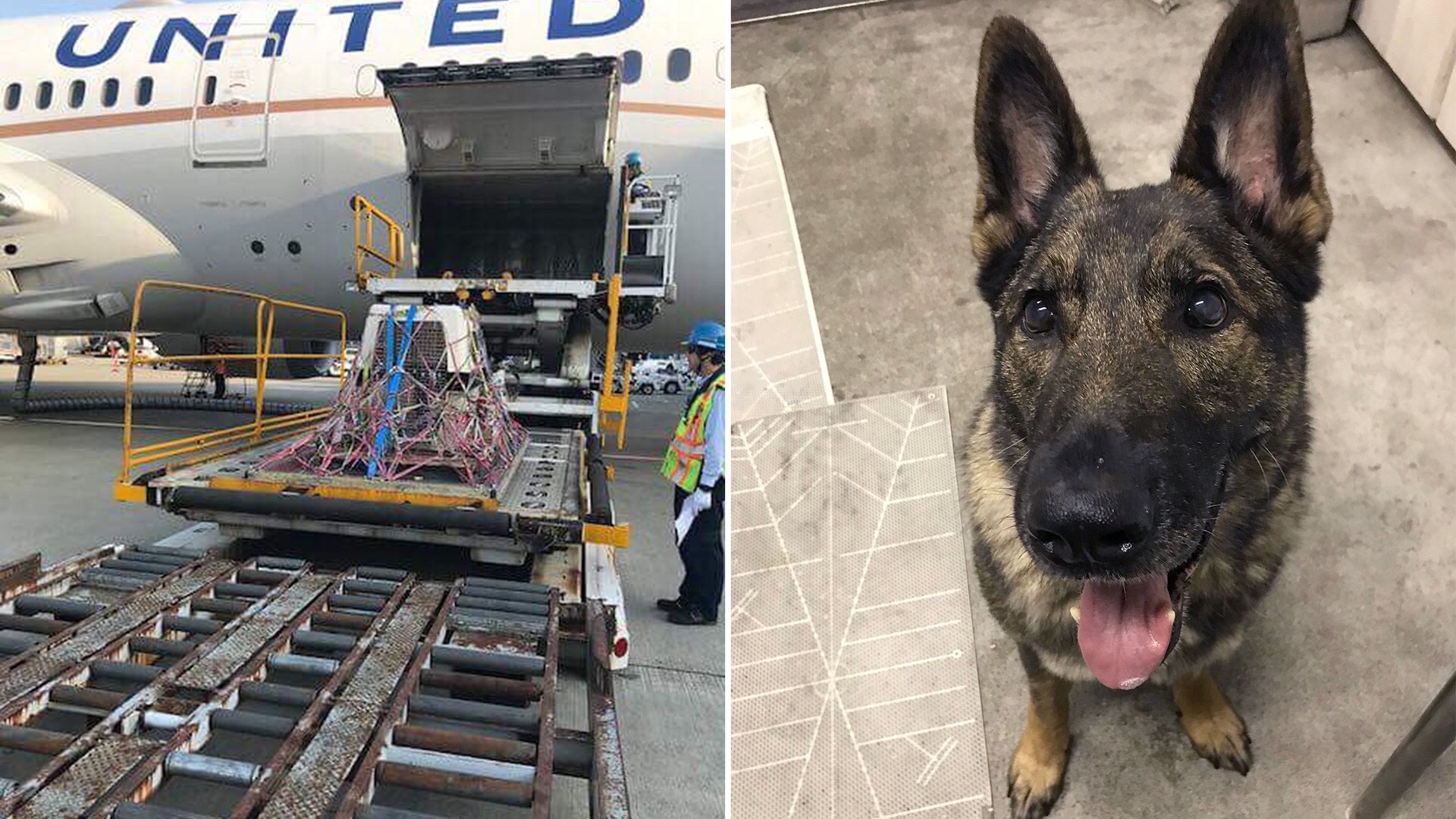United Airlines Accidentally Sends Dog To Japan