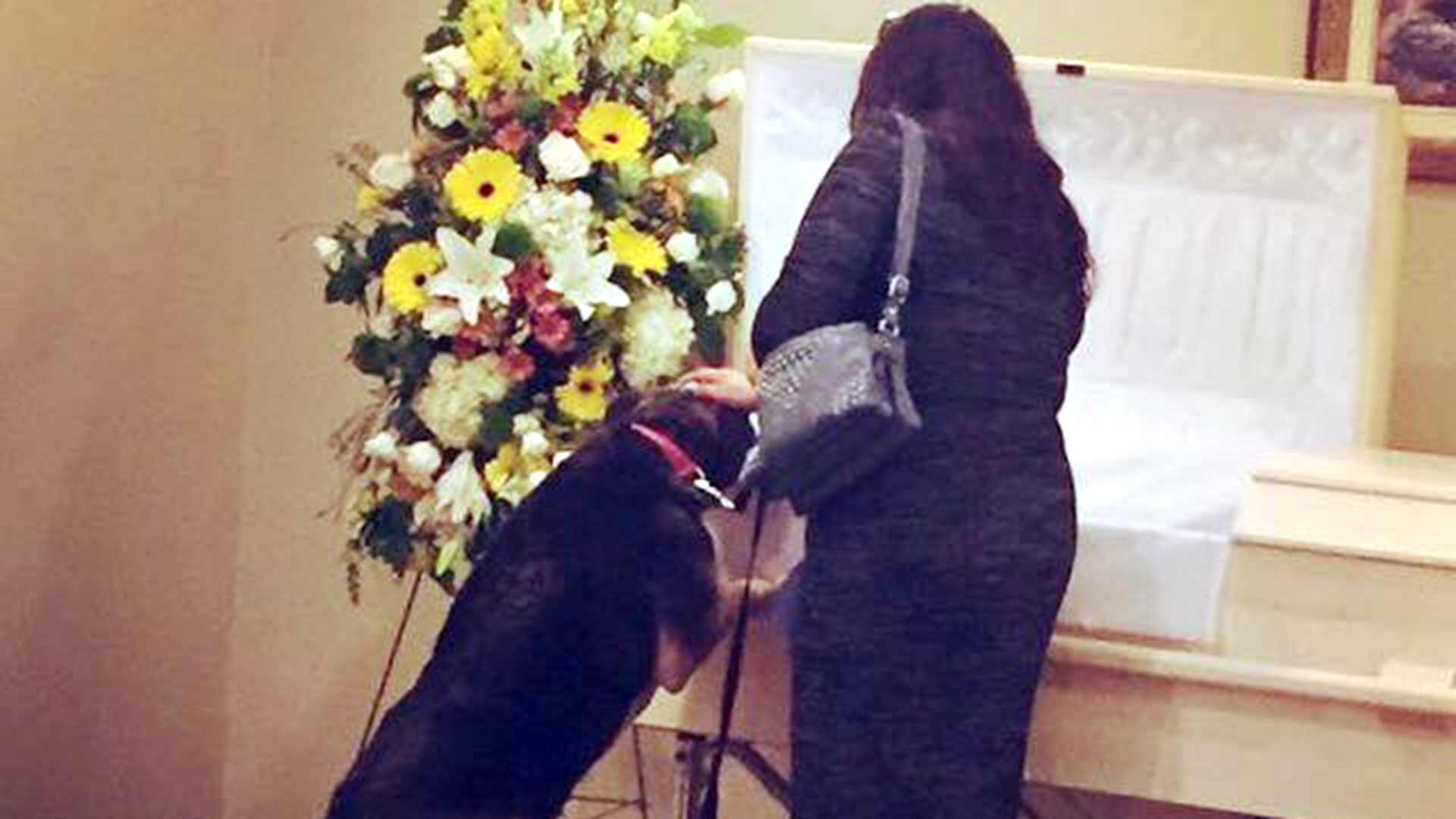 Dog visits funeral home for 1 last goodbye to beloved owner izmirmasajfo