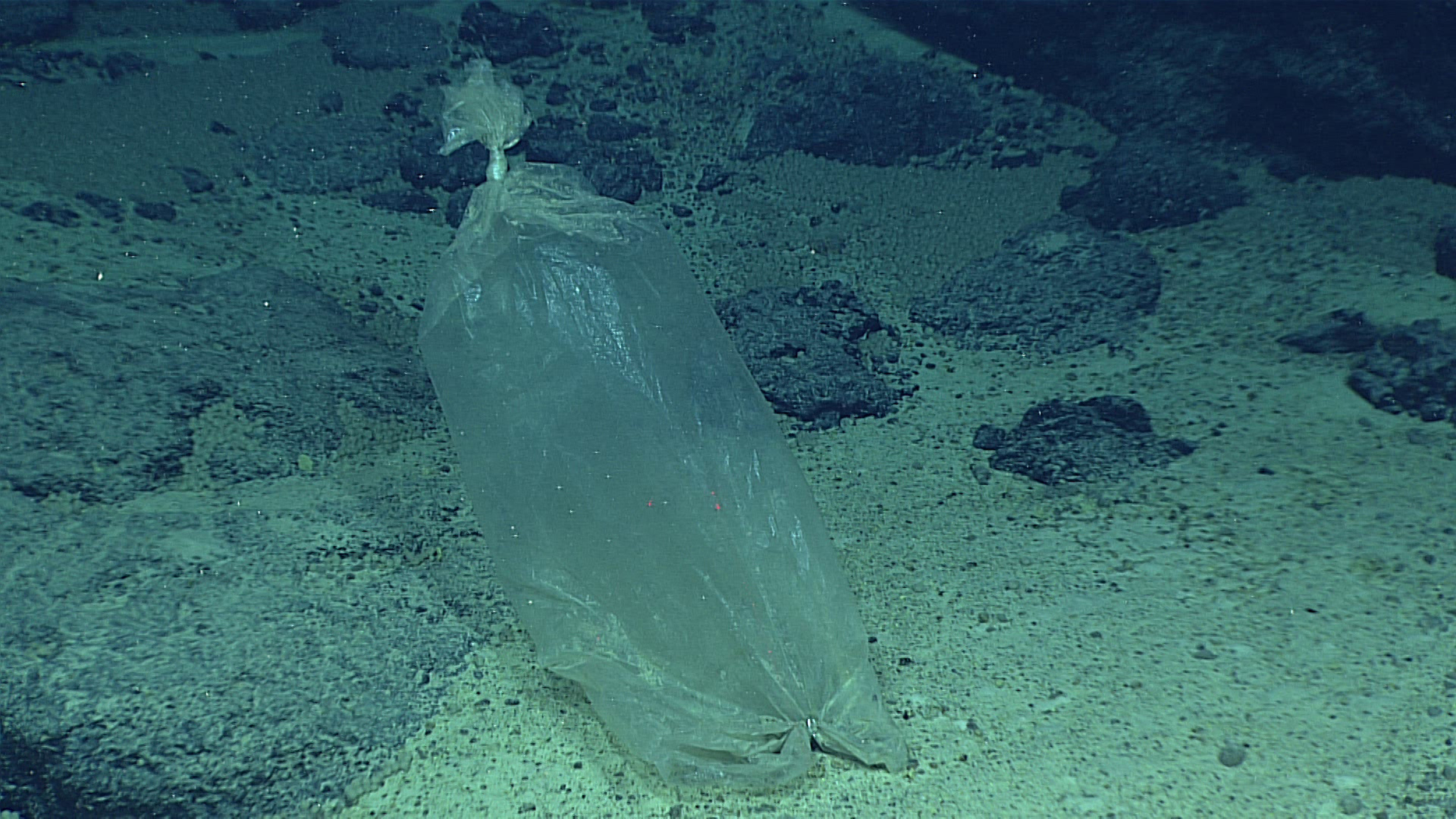 Plastic bag found near the bottom of the Marianas Trench