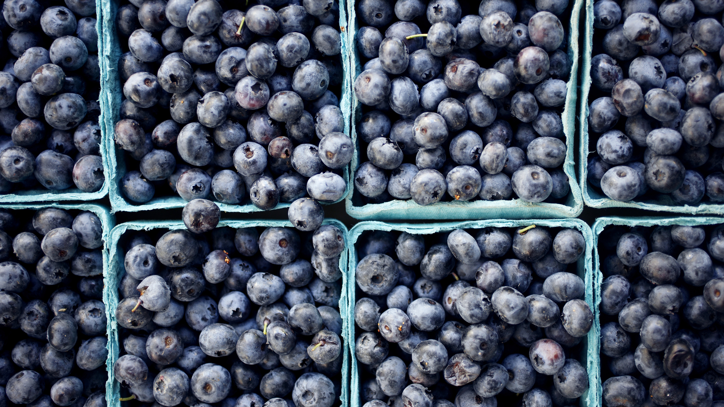 Wild blueberries may boost memory and reduce inflammation ...