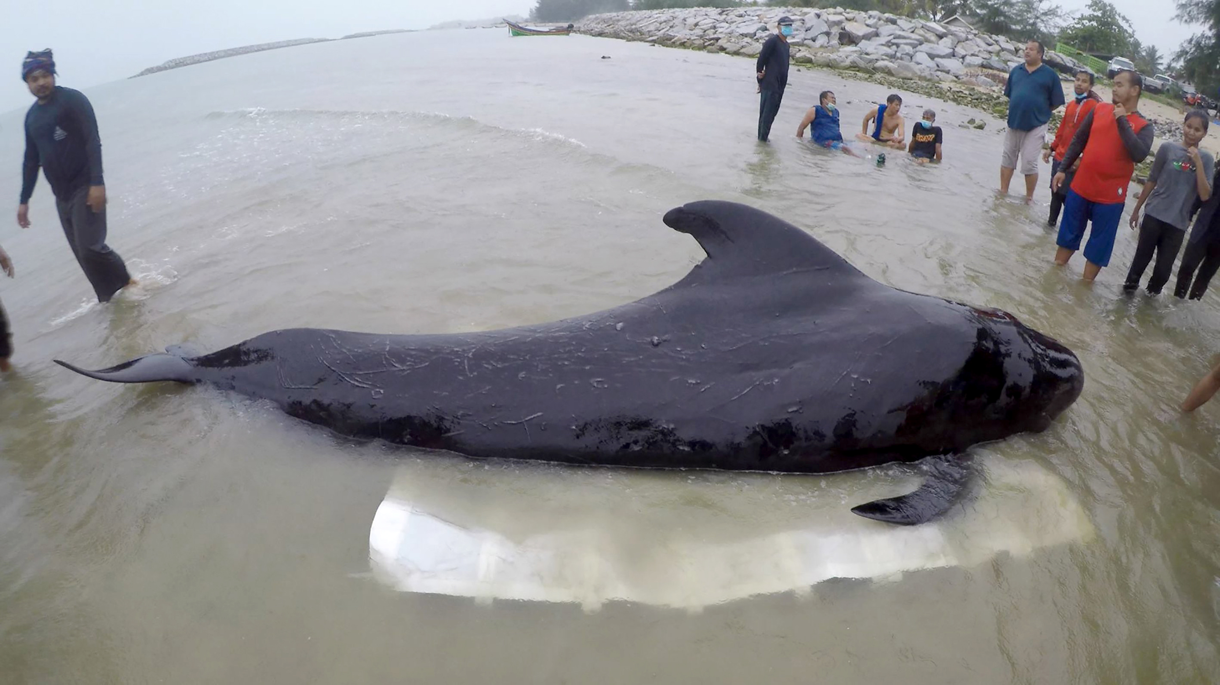 Dead-whale-found-with-17-pounds-of-plastic-in-its-stomach