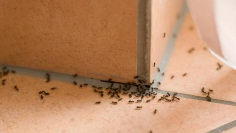 how to get rid of ants in your house rh today com Ways to Get Rid of Ants Get Rid of Ants In- House
