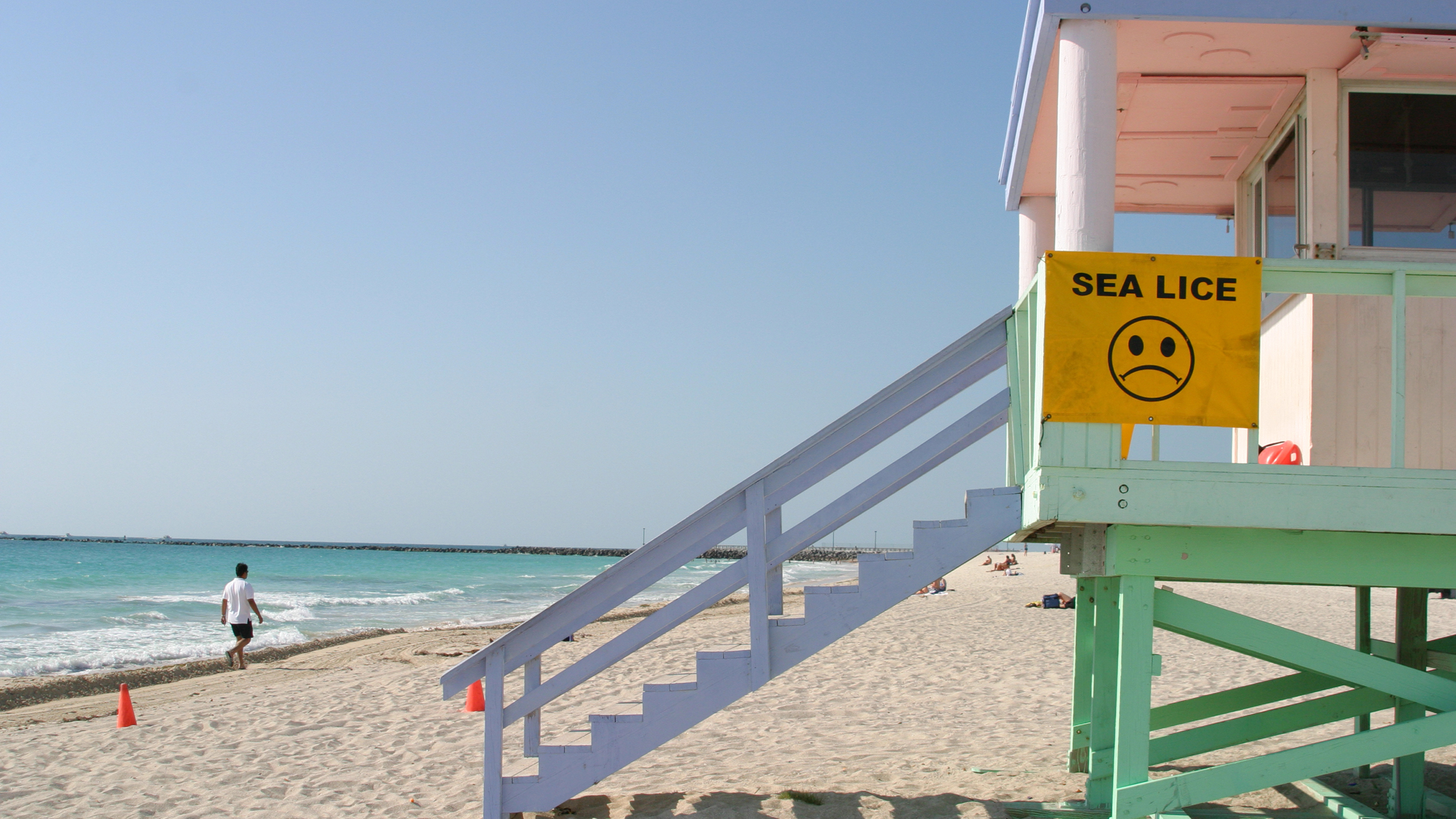 How to avoid sharks, jellyfish and sea lice at the beach