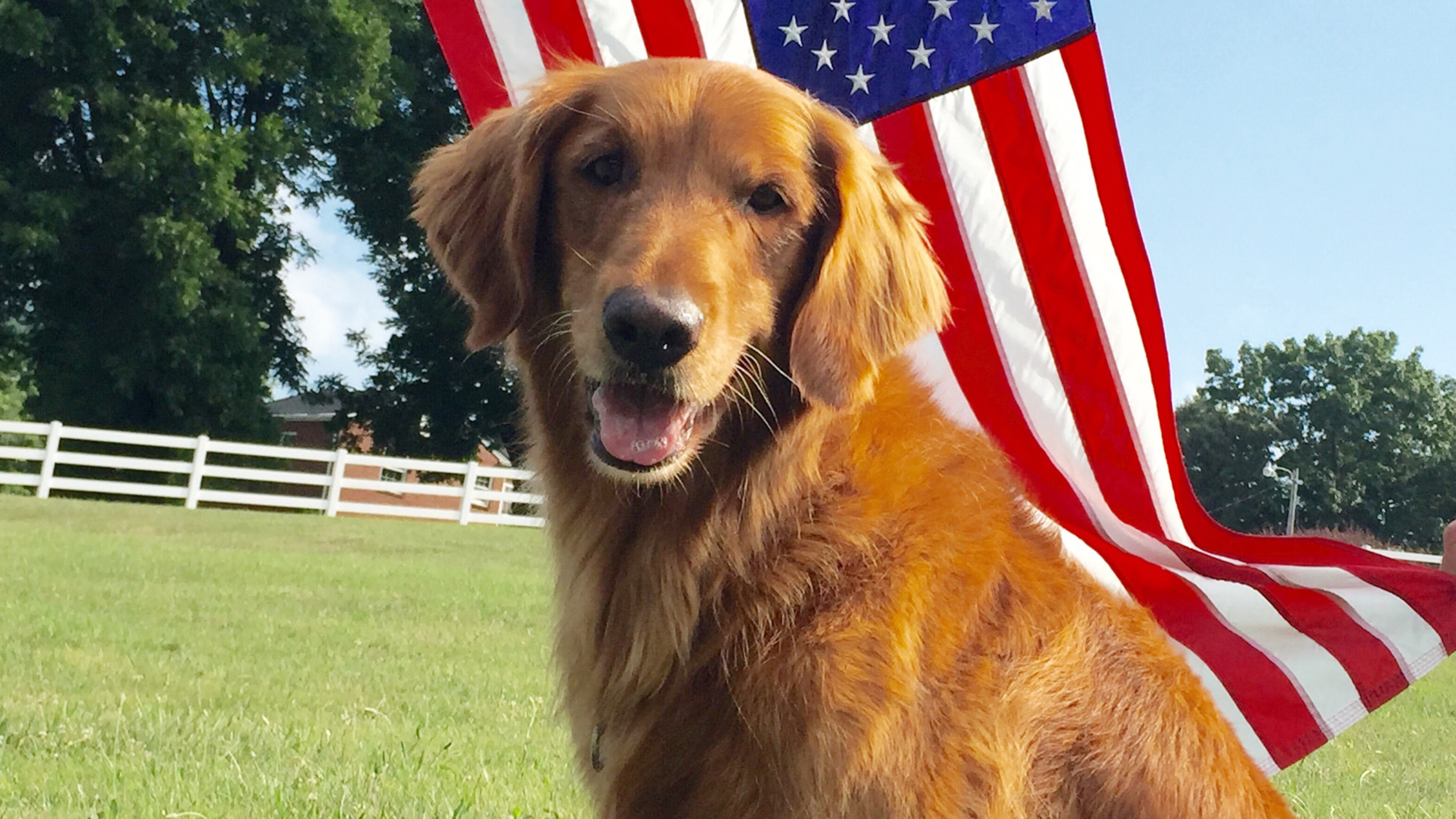 dog who played duke in famous bush s baked beans commercials dies