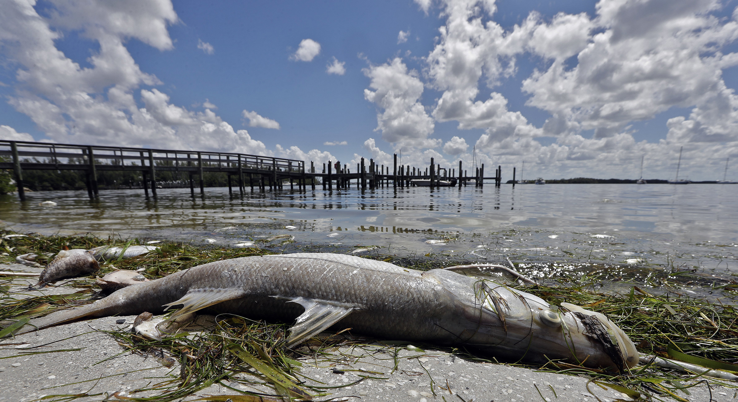 Toxic red tide: Florida researchers investigate what's