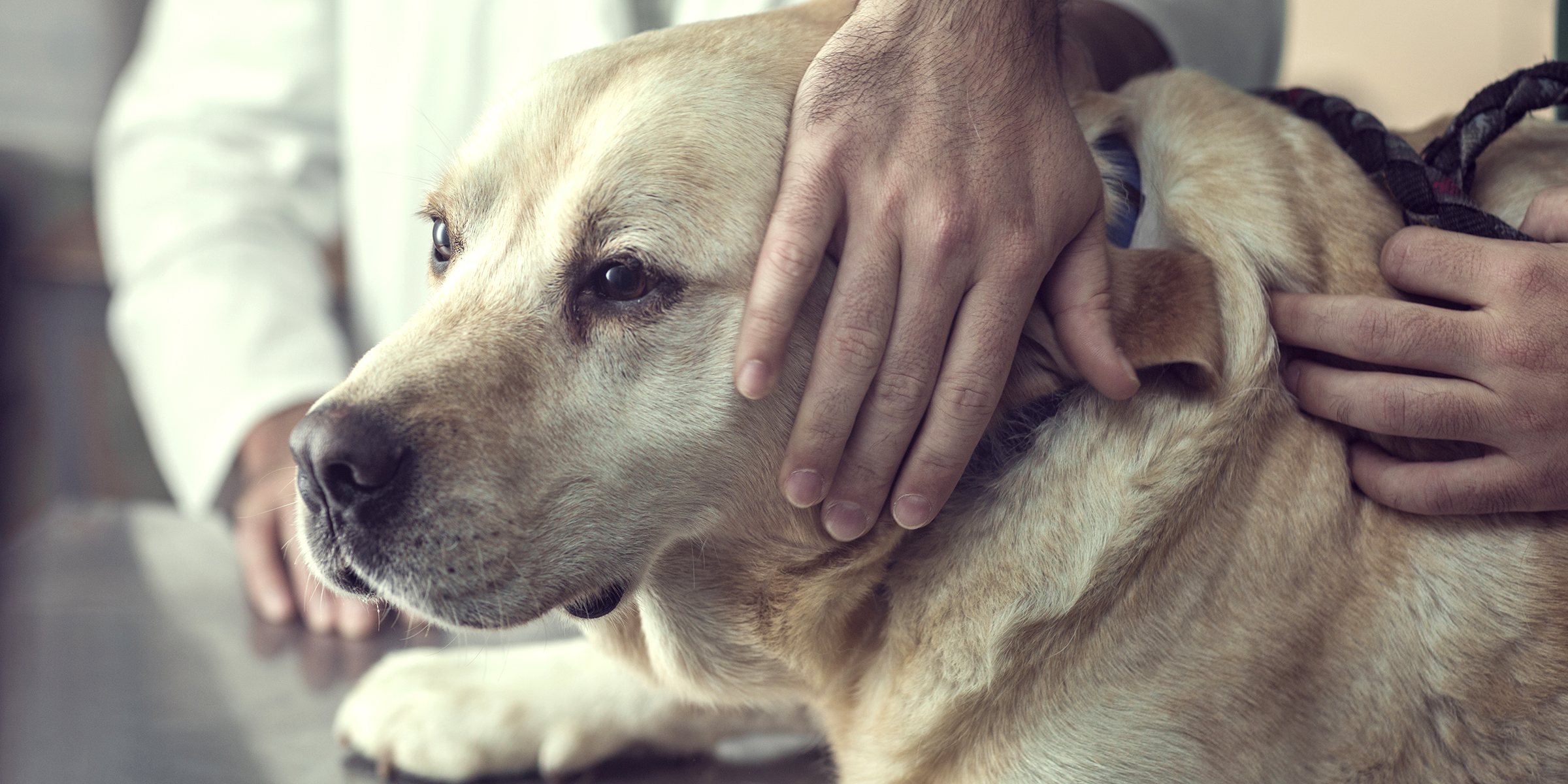 Vet S Comment About Pet Owners Leaving Room Before Euthanasia Sparks Conversation