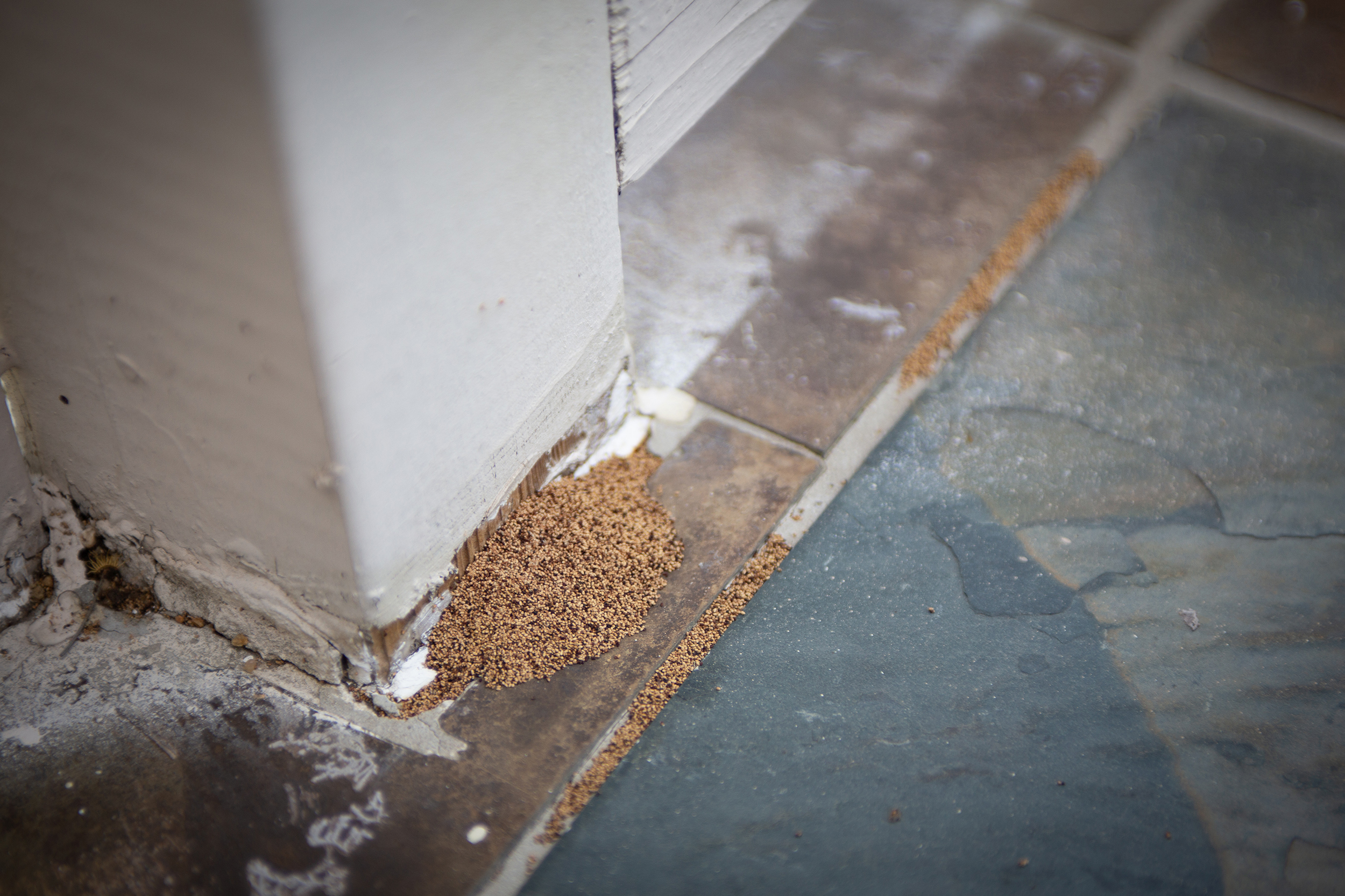 How To Get Rid Of Termites Termite Treatments Signs To Know