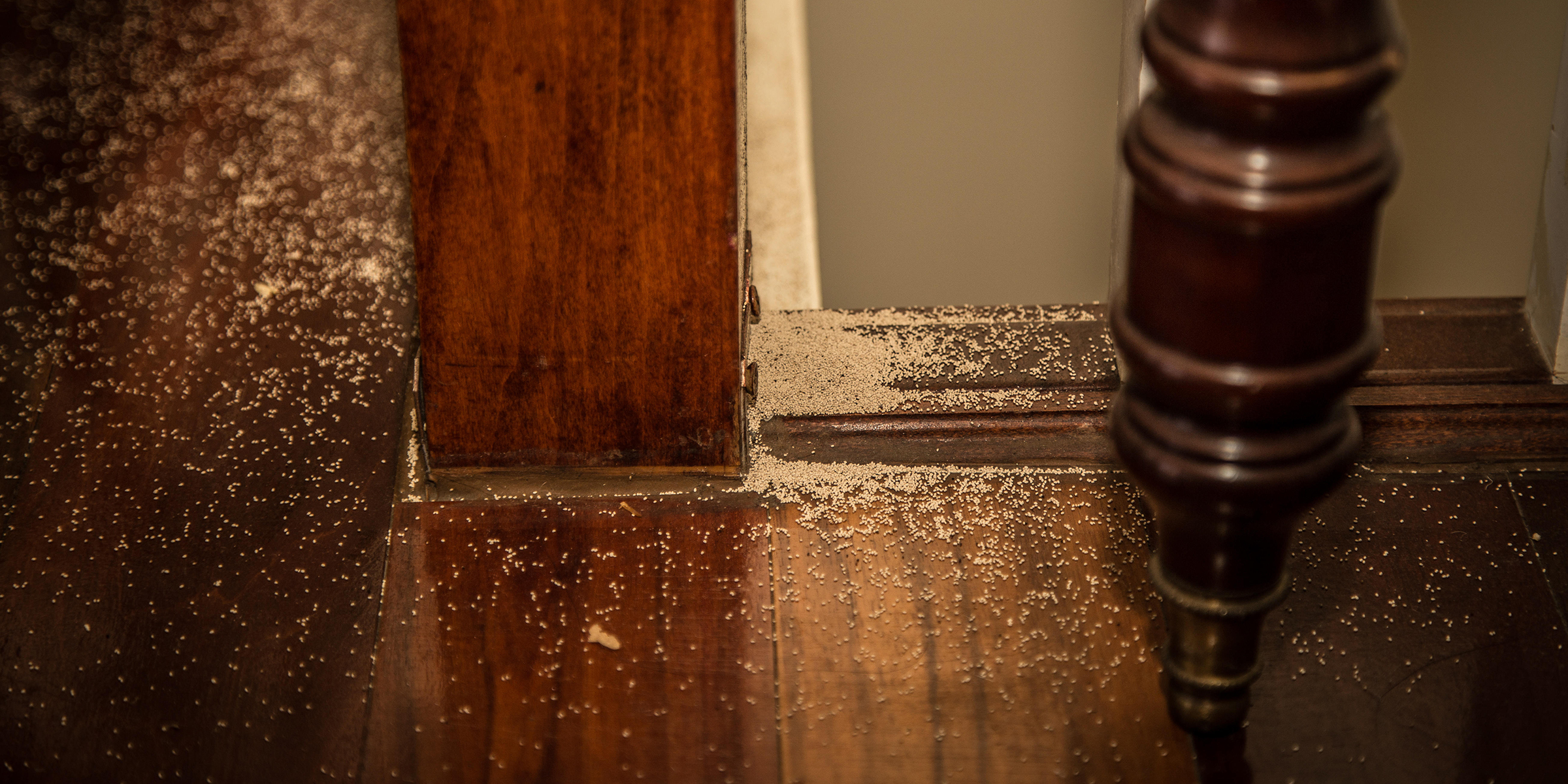 How to get rid of termites: Termite treatments, signs to know
