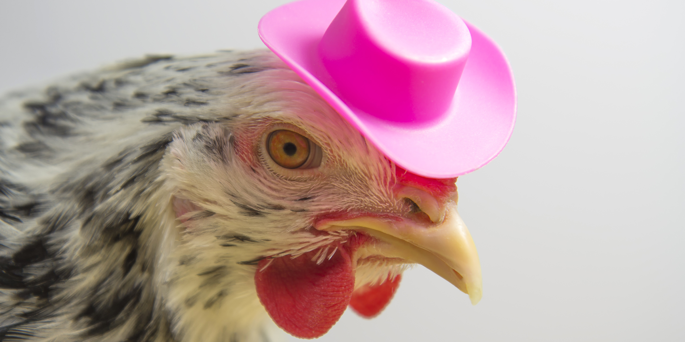 you can dress chickens in halloween costumes cdc says