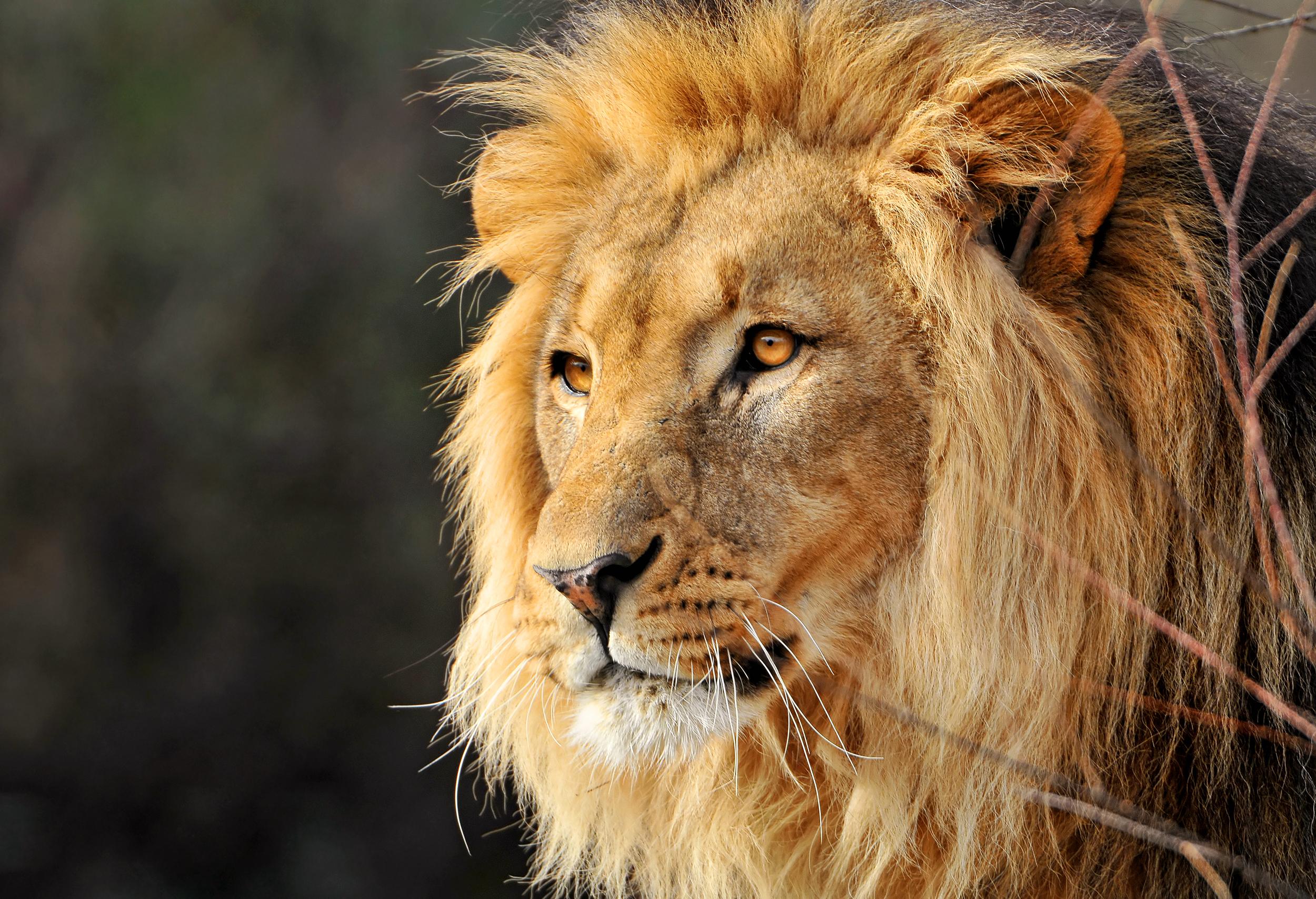 escaped lion kills 22 year old intern at north carolina zoo