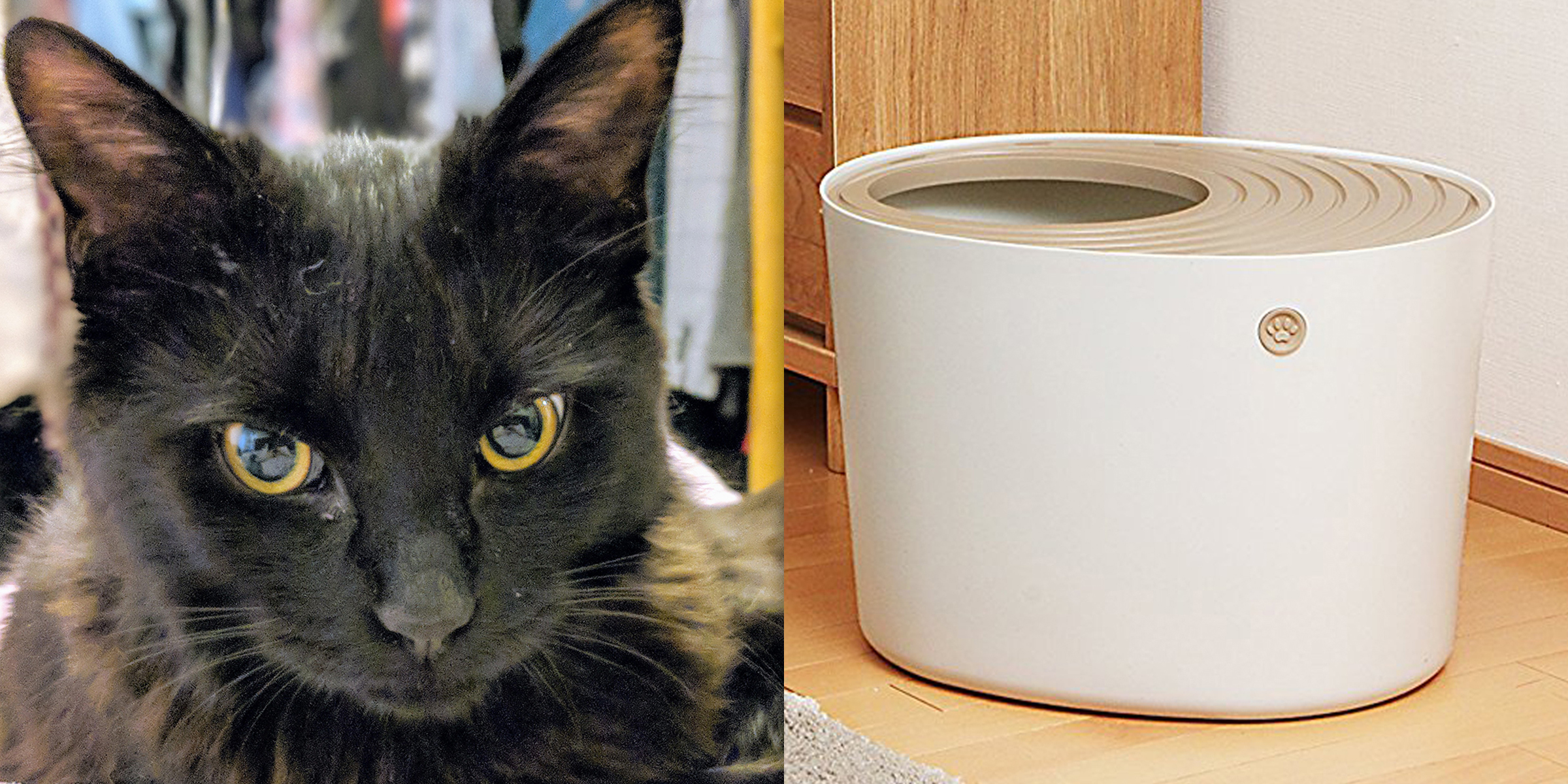 The best cat litter box is a top-entry litter box