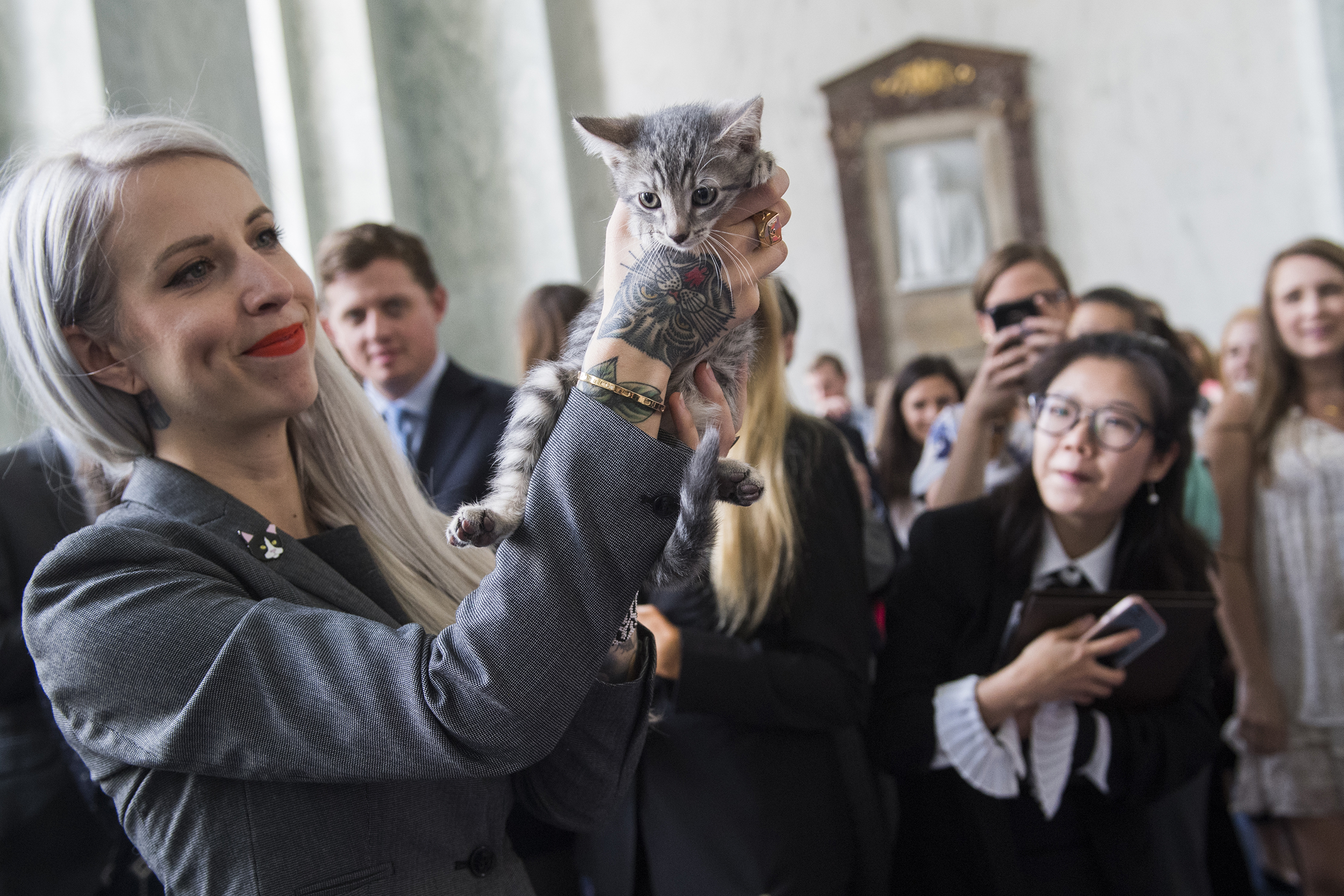 Cat cannibalism: Report discloses 'questionable' gov't animal