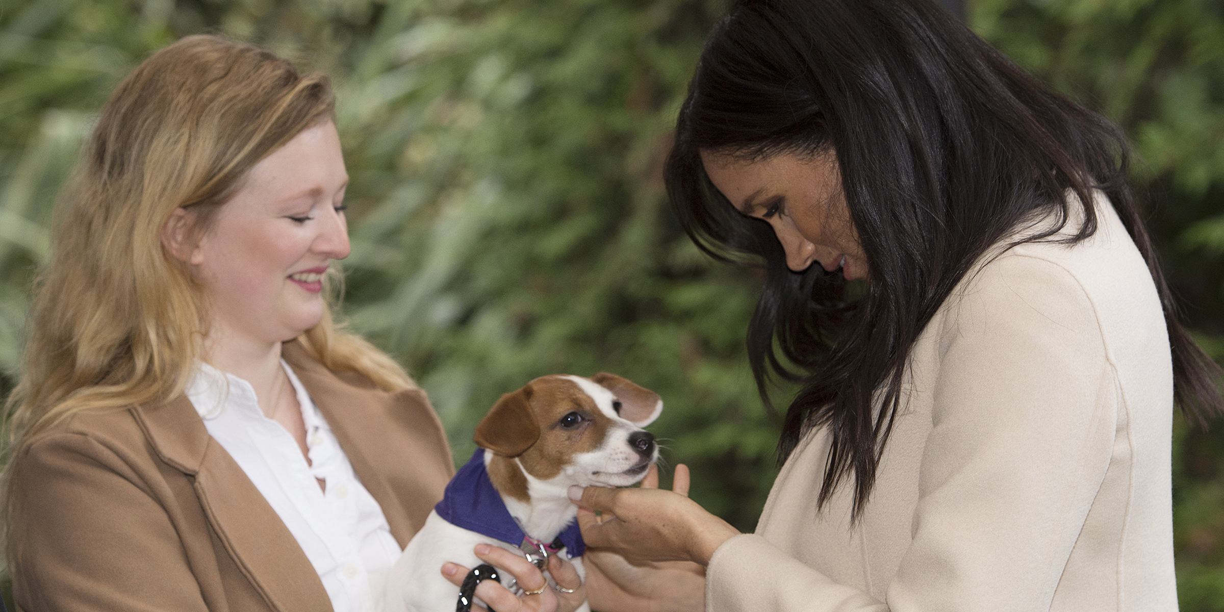 22be9006035e2 Meghan Markle shares heartfelt message on the joy of pet adoption. The  Duchess of Sussex ...