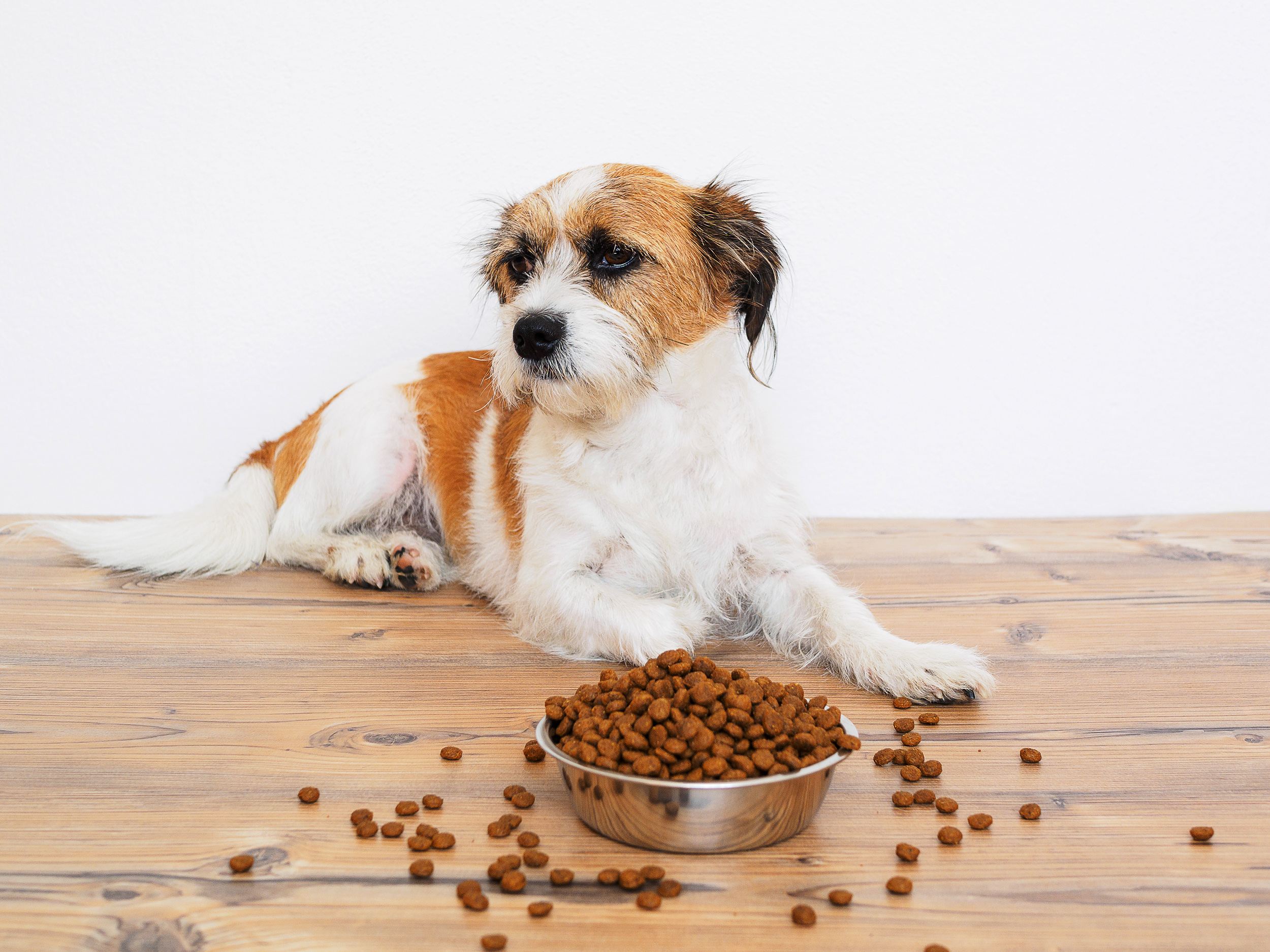 After FDA warning about grain-free pet food, what's safe to