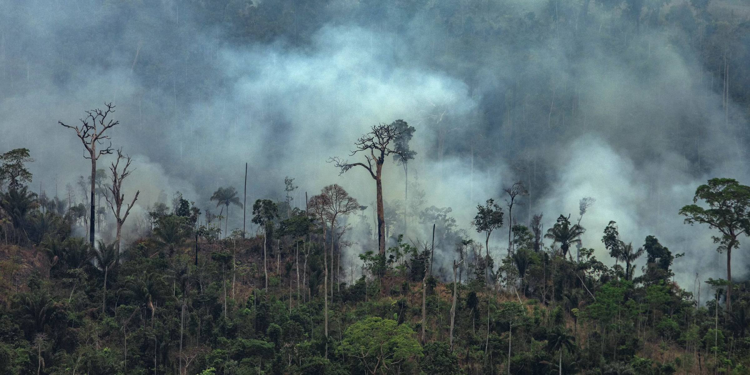 Destruction of just 3% more of Amazon could have terrible effects worldwide, scientists say